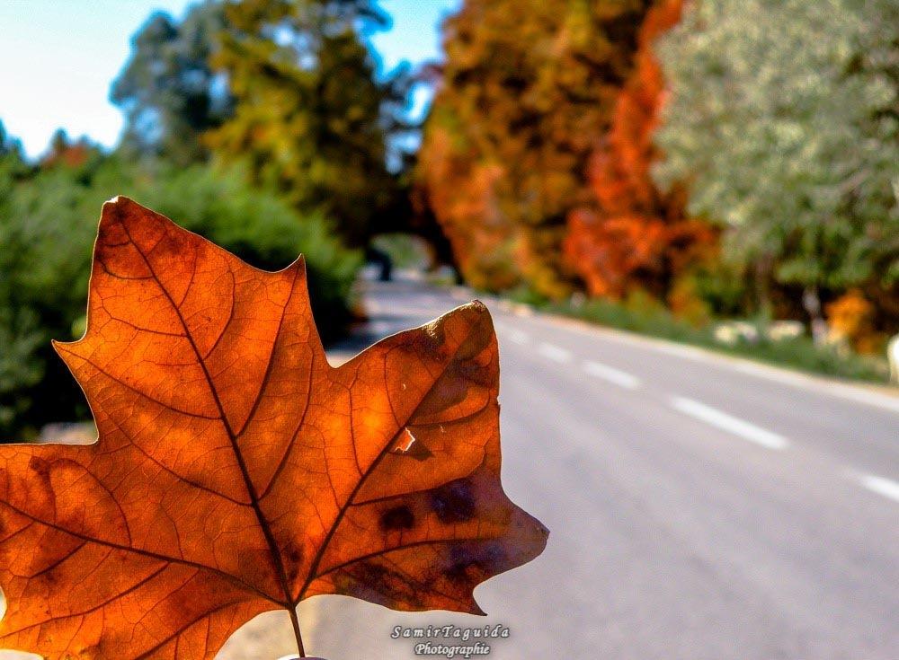 Autumn leaves by Samir Taguida
