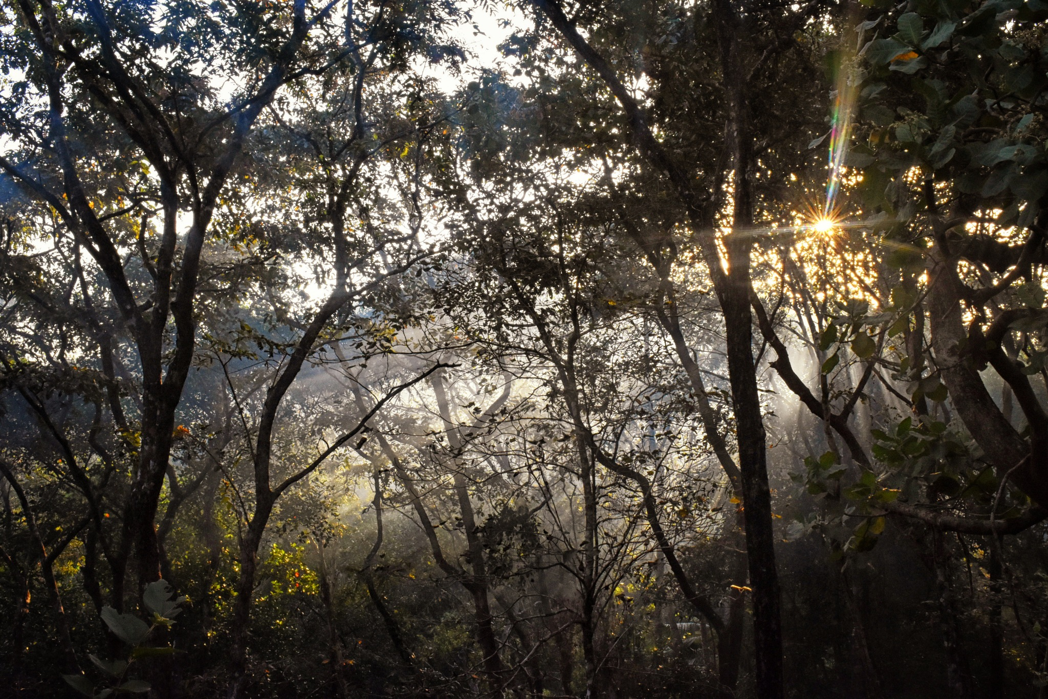 Misty Morning by Vedant Kumbhar