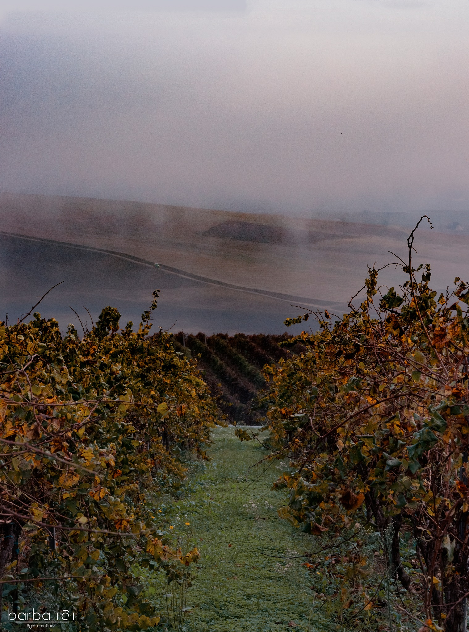 Foggy vineyards by Nicolò Barbano