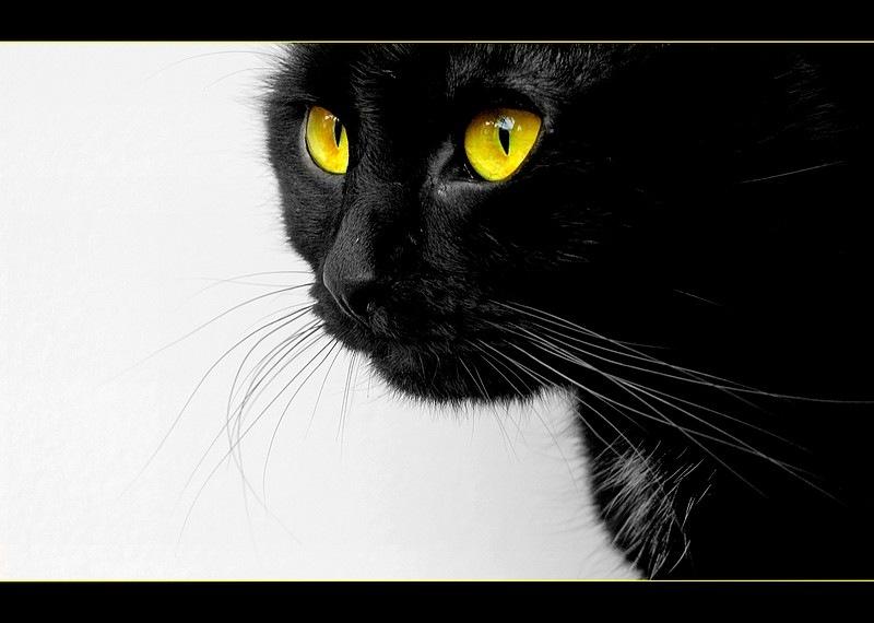 Black and yellow by Eva Jurković