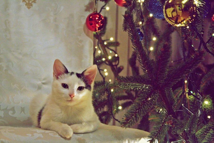 All I want for Christmas by Eva Jurković