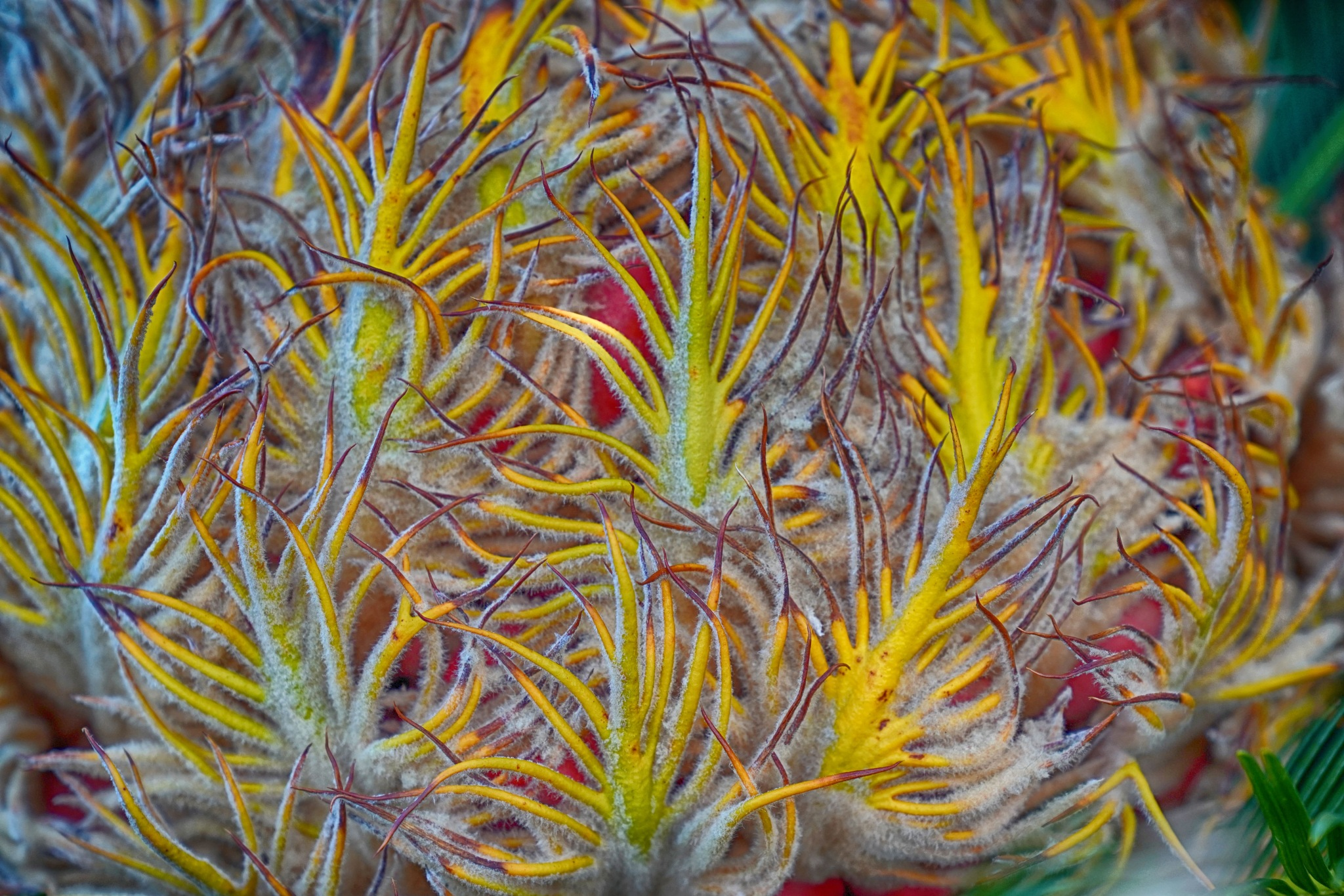 Palm Fruit - Okinawa by James K Polmanteer