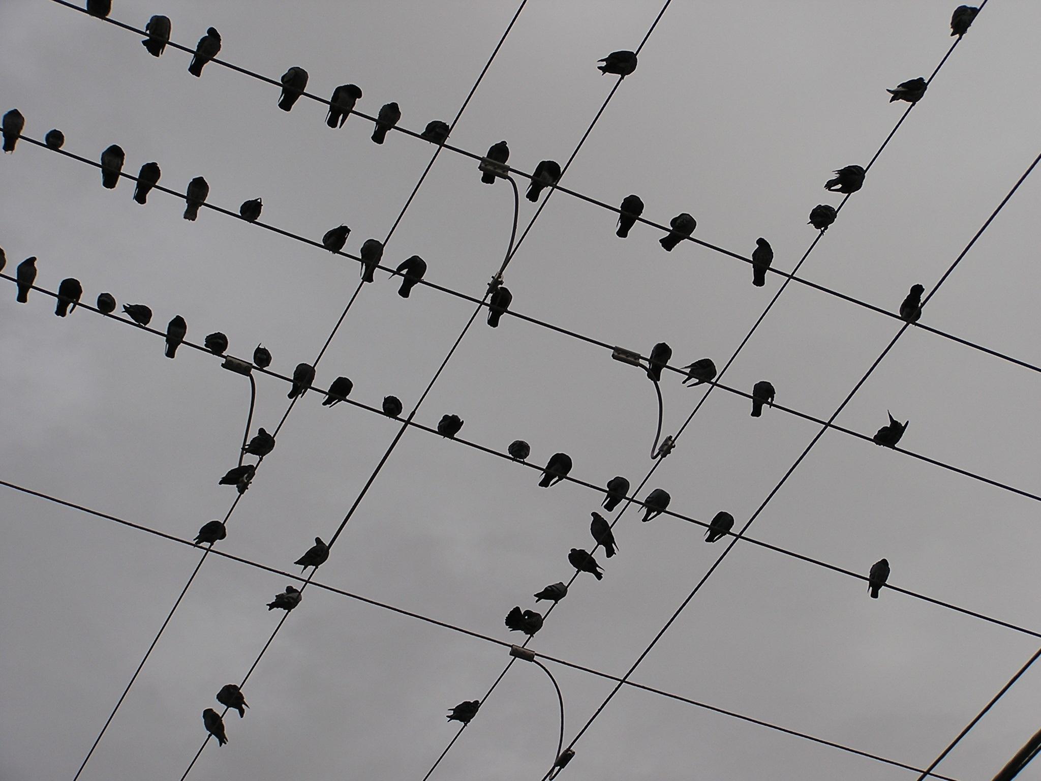 Avian Intersection by John Banks
