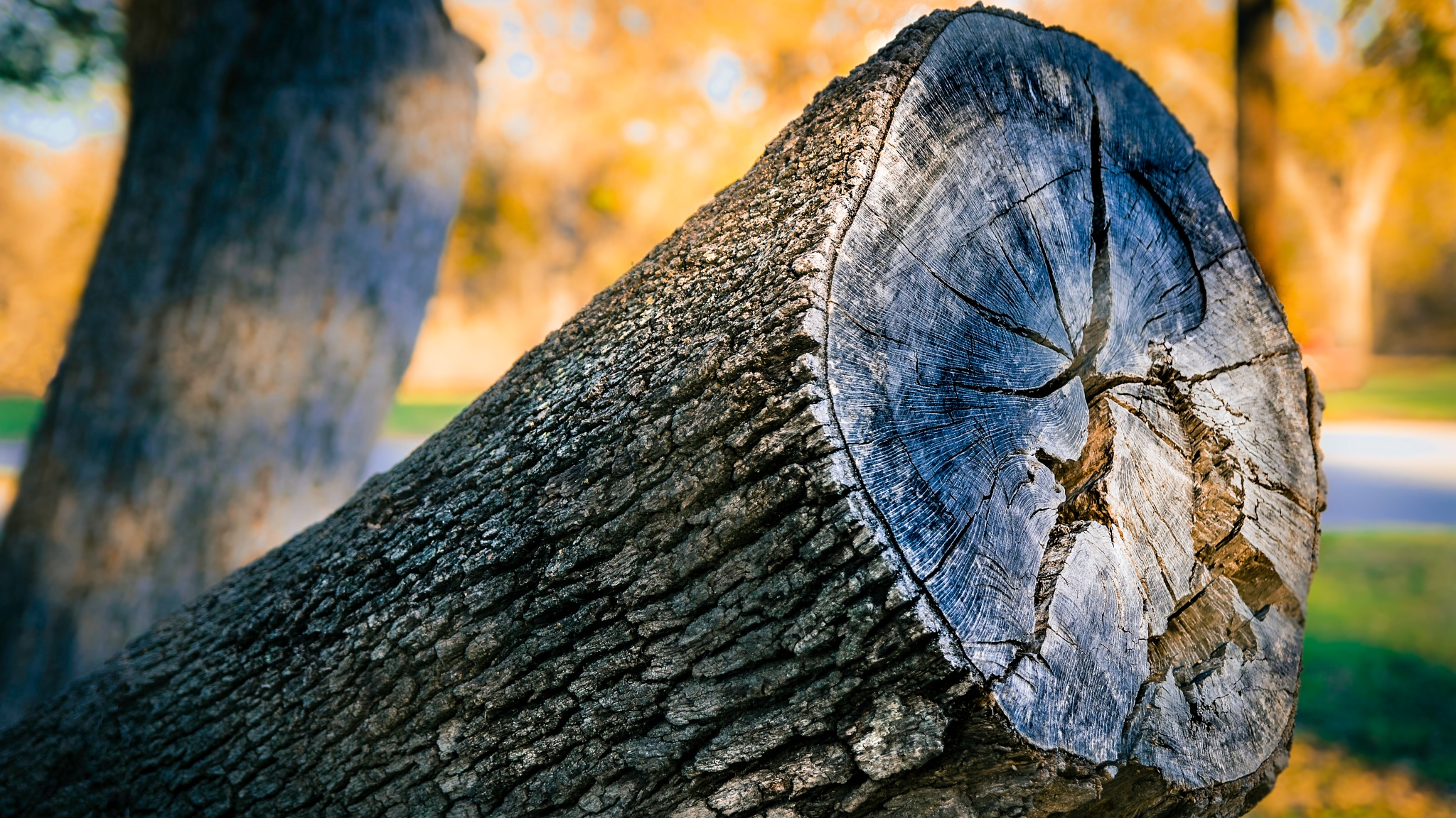 Tree Stump by Lane L Gibson
