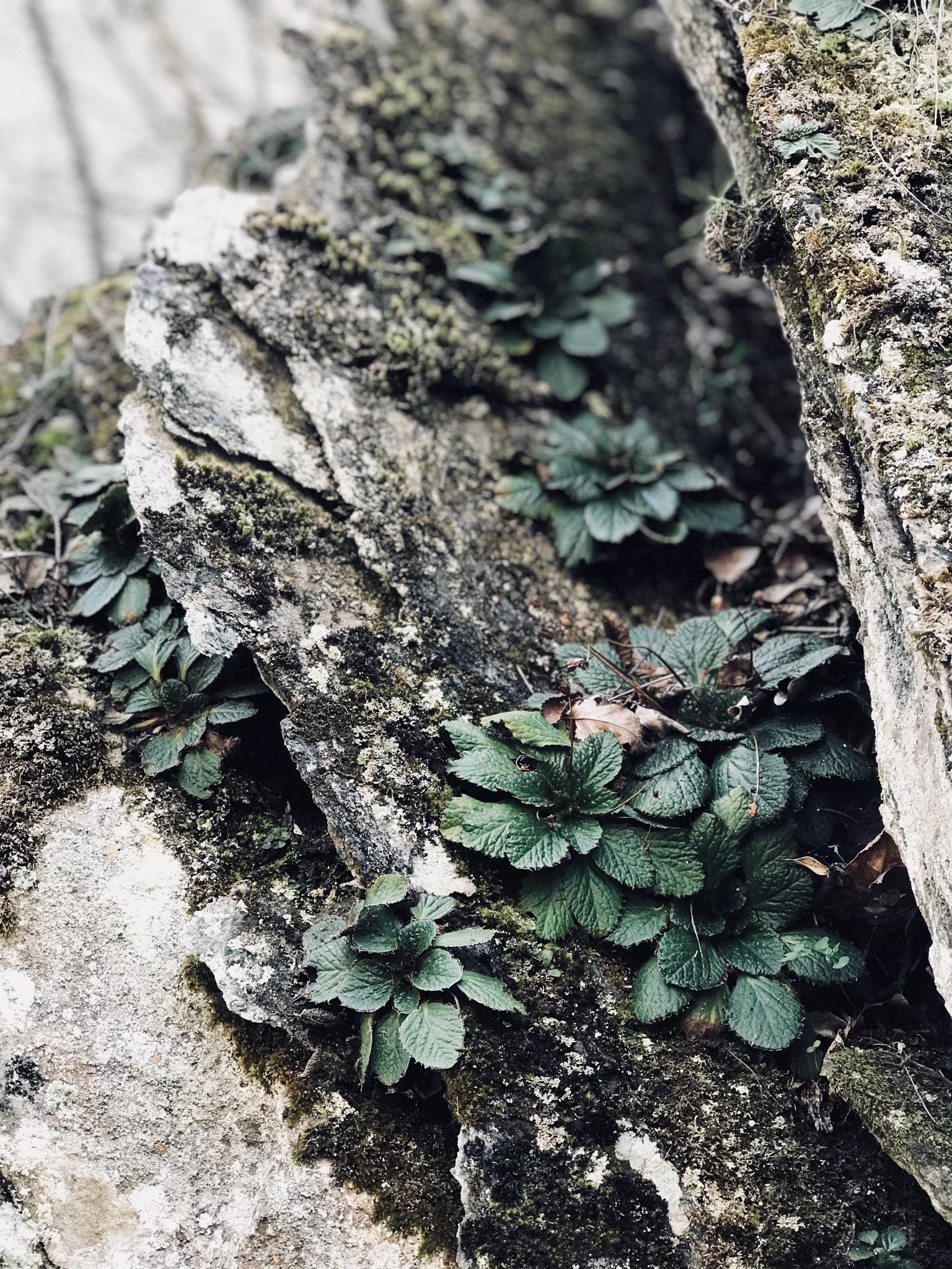 Plants in rock by Vladimir Bocevski