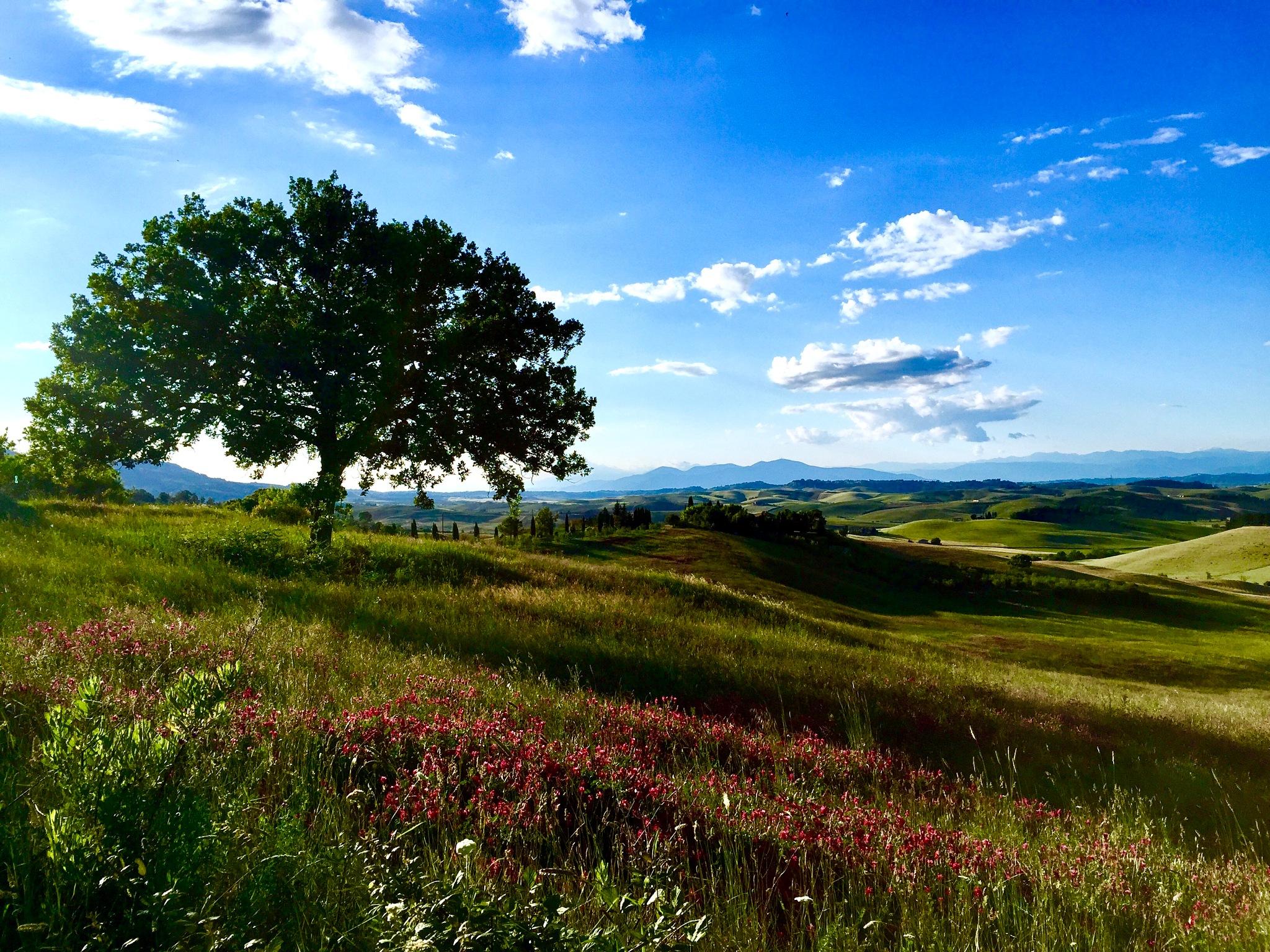 Tuscany_spring by Orsolya Békési