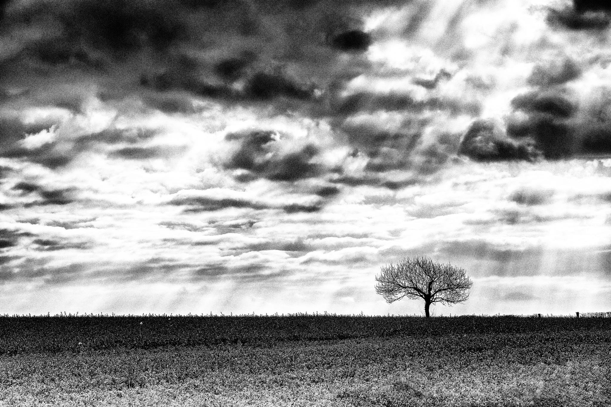 The Lonely Tree by Steve Deakin