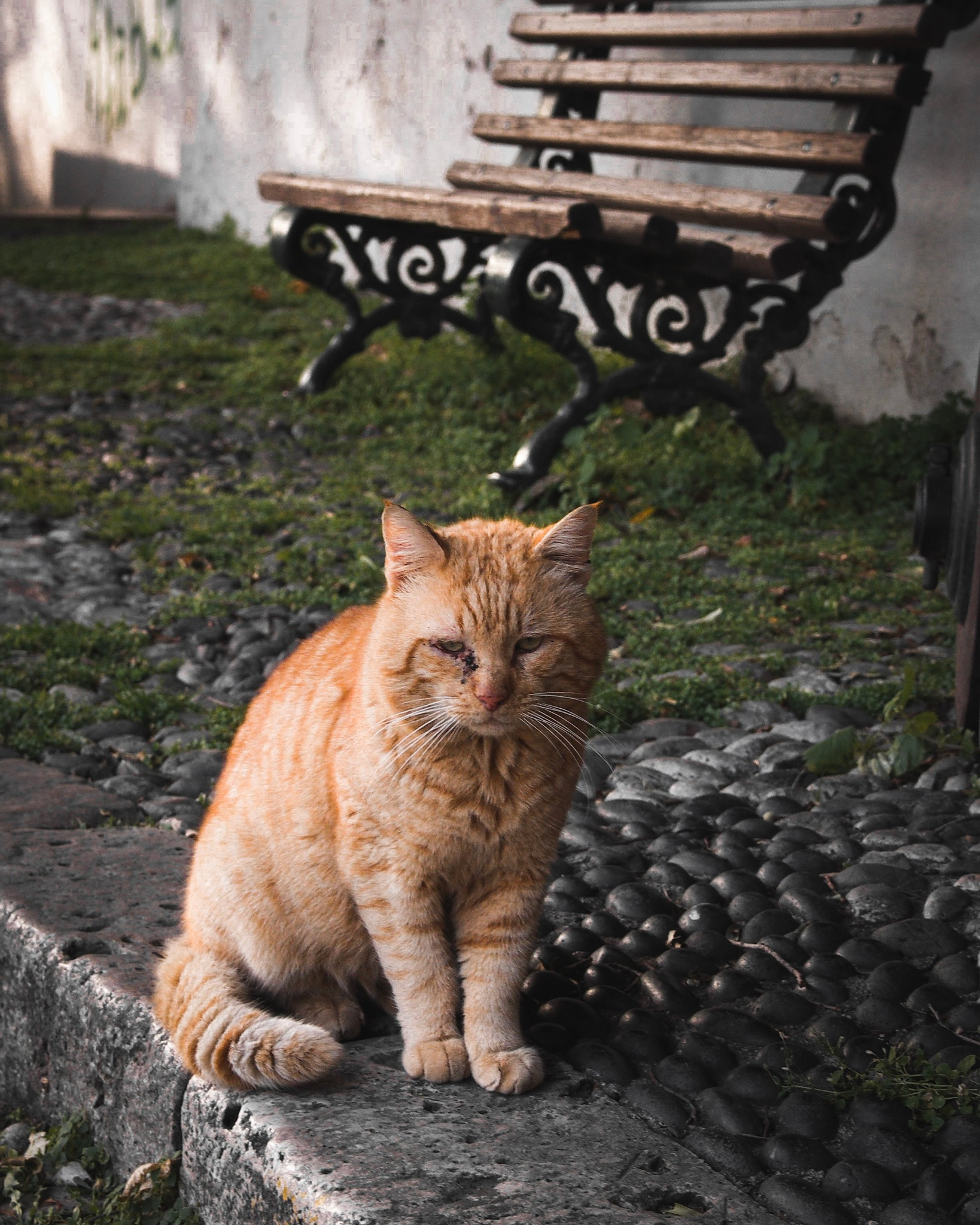 Stray Cat  by Patroklos Papalexis