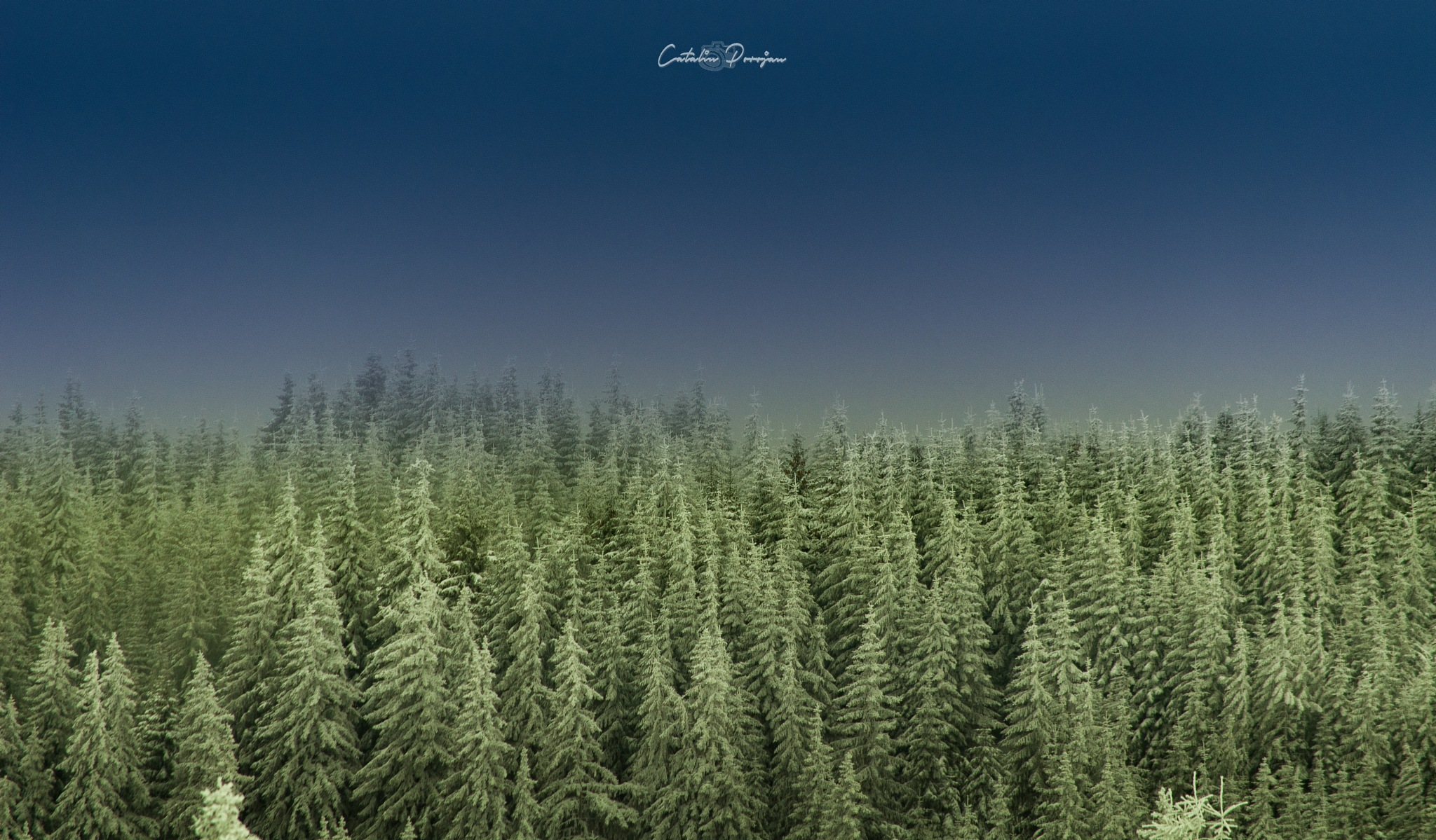 My beautiful Romania - trees of Christmas  by Catalin Porojan