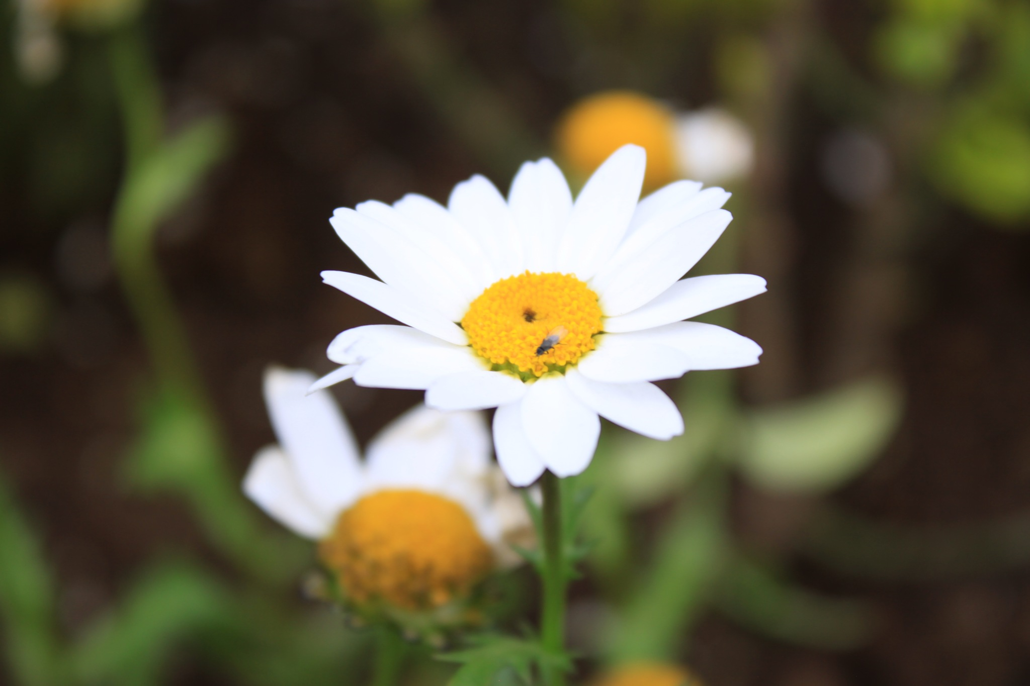 Flower :) by Saba