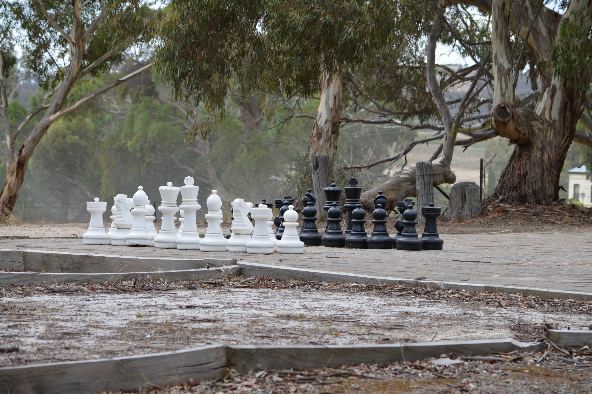 Chess in the Bush by Kev Peirce