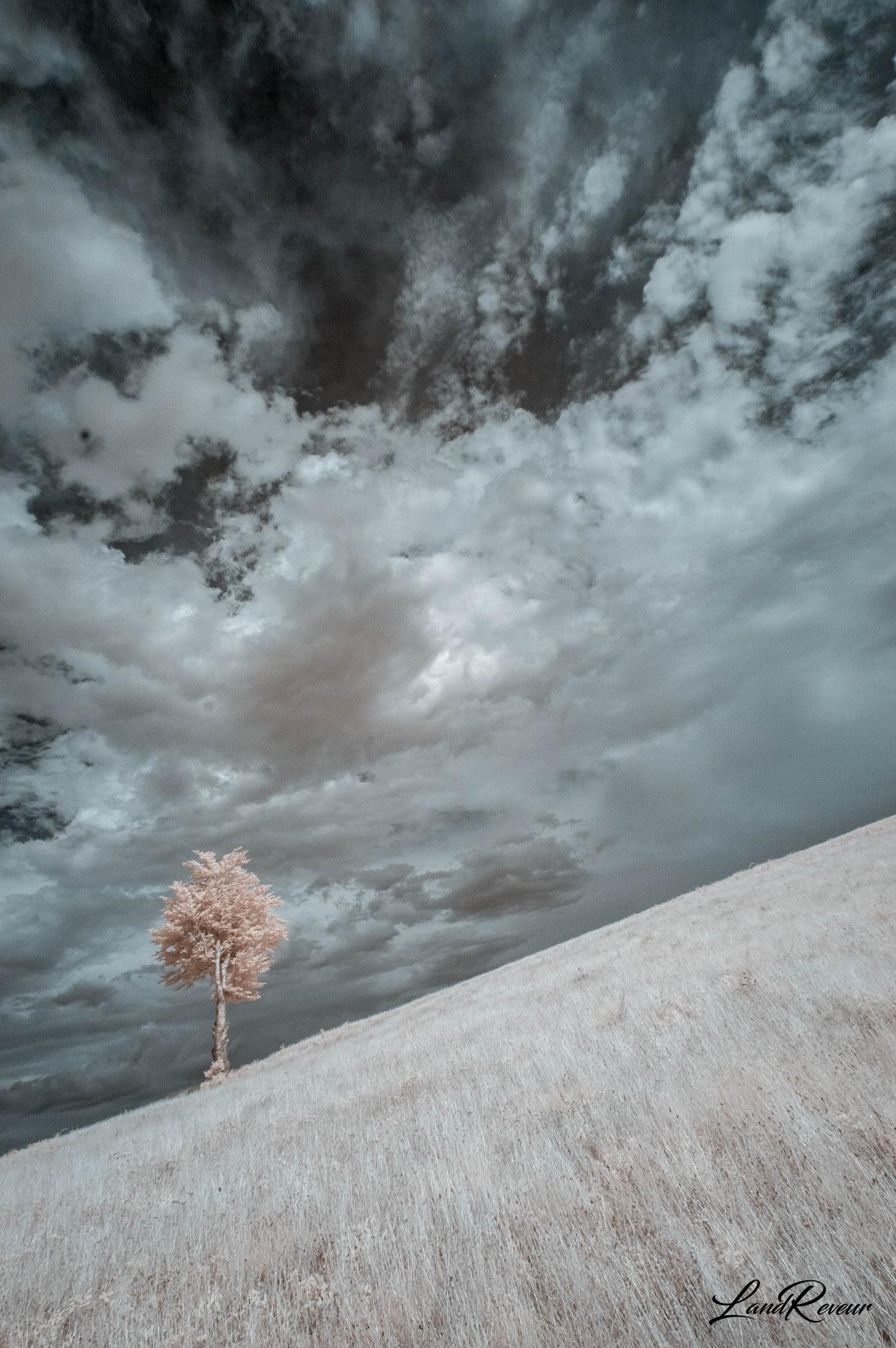 IRealité : l'arbre dans la pente by LandReveur