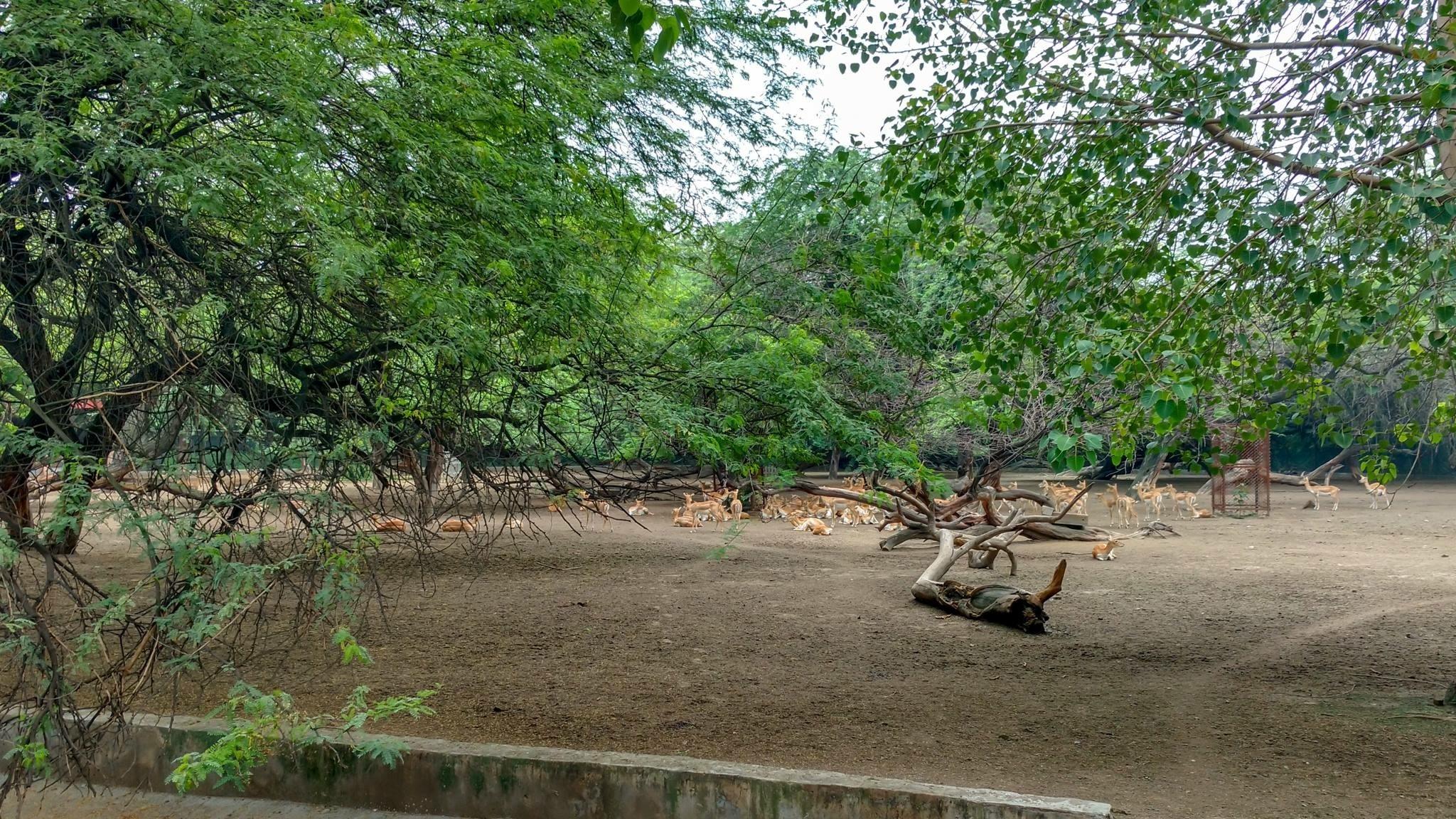 Deer Park  by Bhanu Rathore