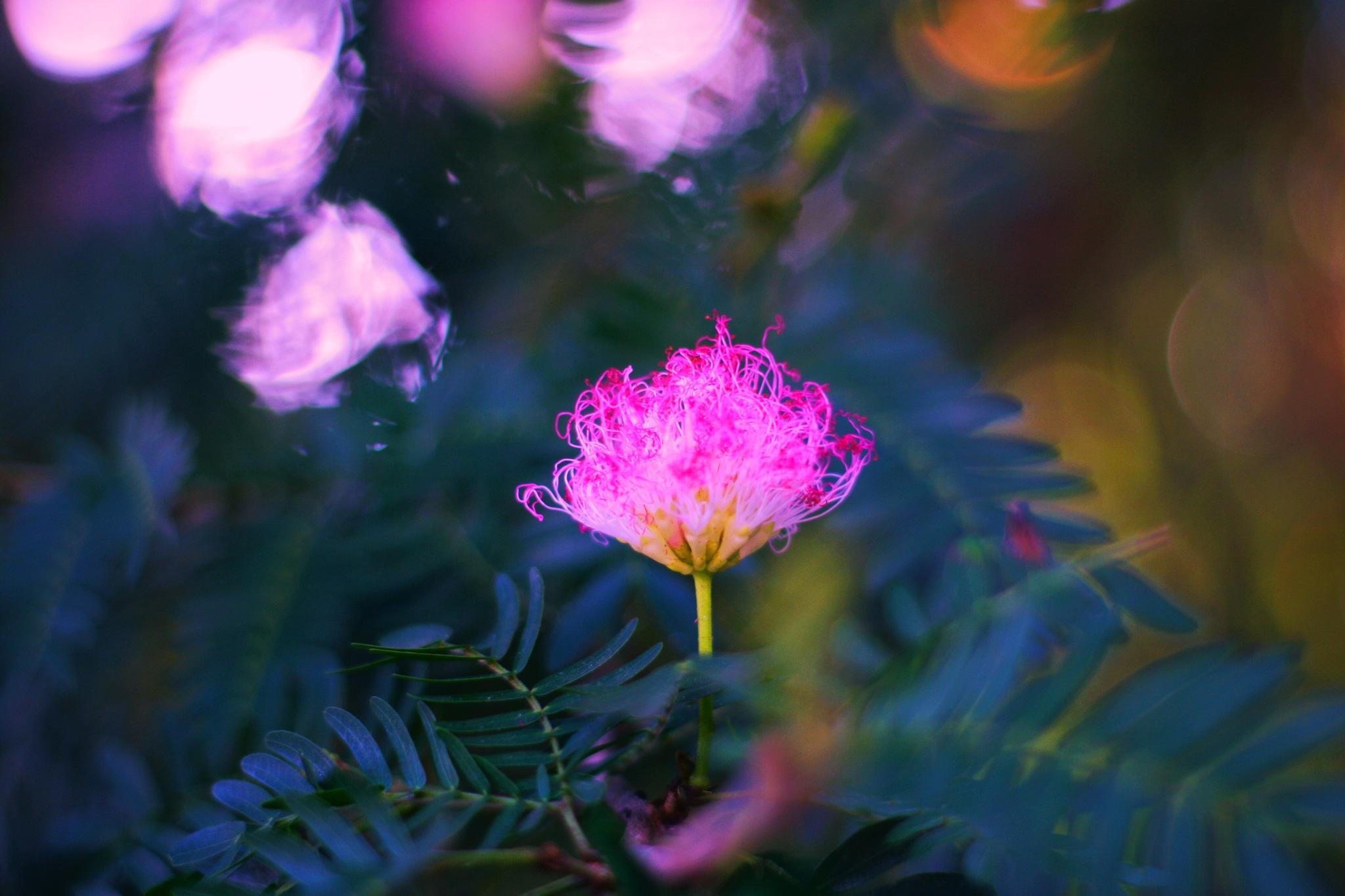 Beach flower by Barrett Bear Baker