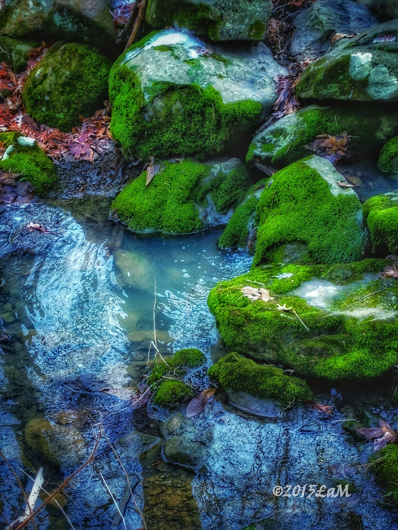 mossy stream by Lisa A Manco