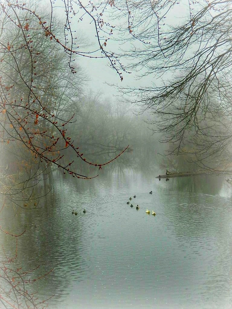 Geese in the Misty Morning by Lisa A Manco