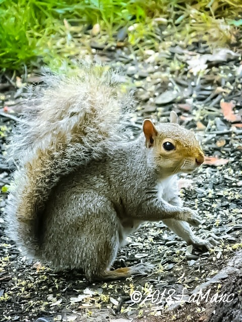 Oliver (always politely asks for more peanuts)  by Lisa A Manco