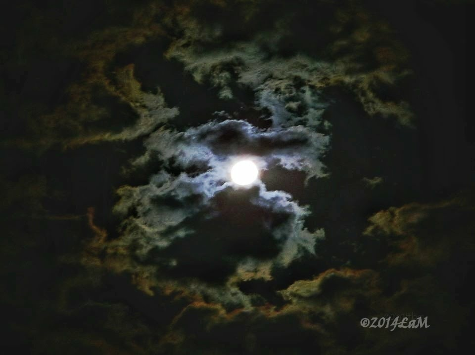 Moondance by Lisa A Manco