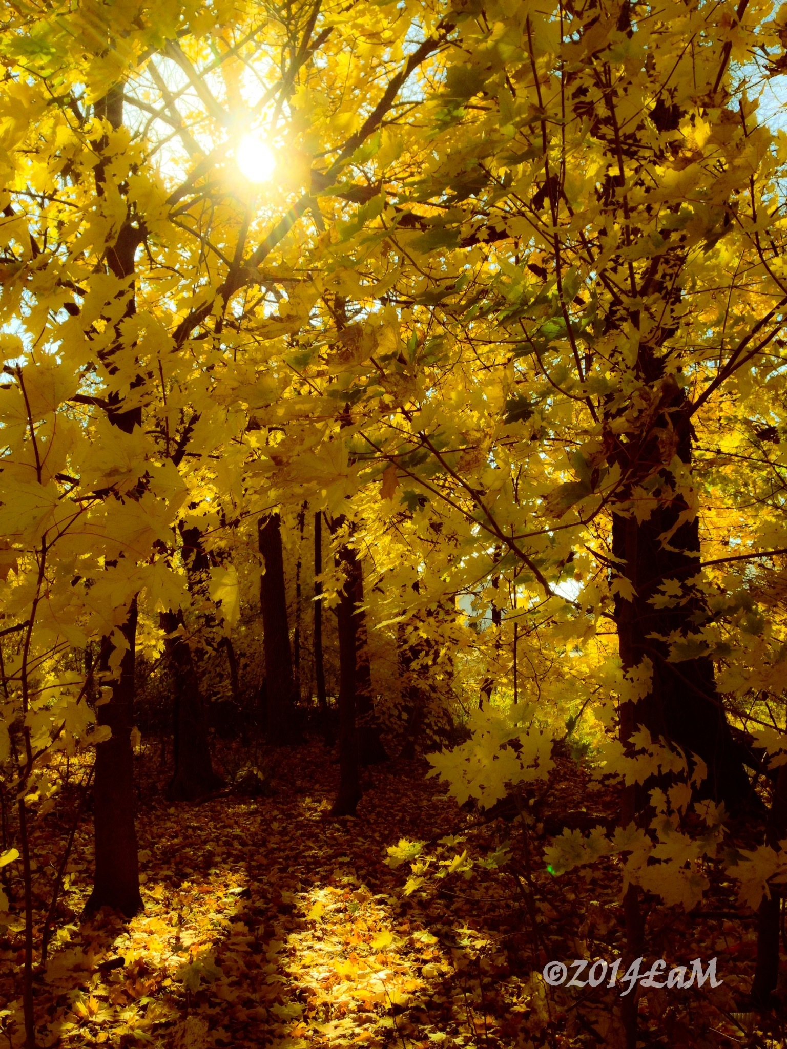Golden Autumns by Lisa A Manco