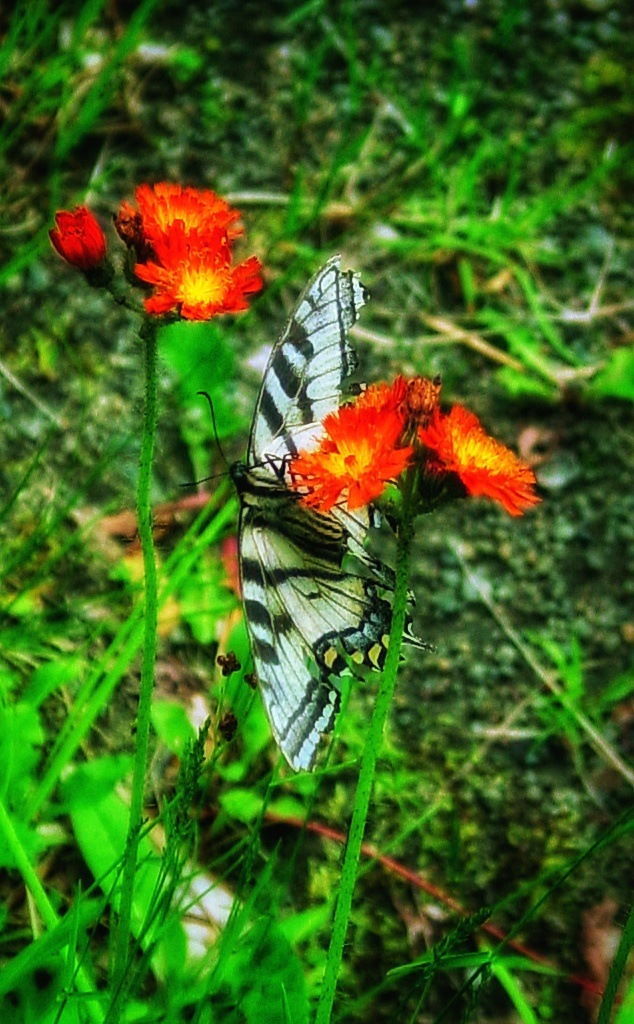 Butterfly in the Adirondacks by Lisa A Manco
