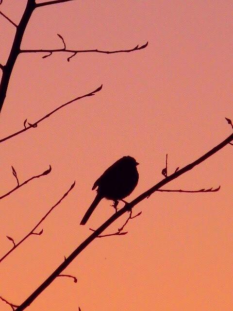 """Faith is the bird that feels the light when the dawn is still dark."" ~ Rabindranath Tagore by Lisa A Manco ❤"