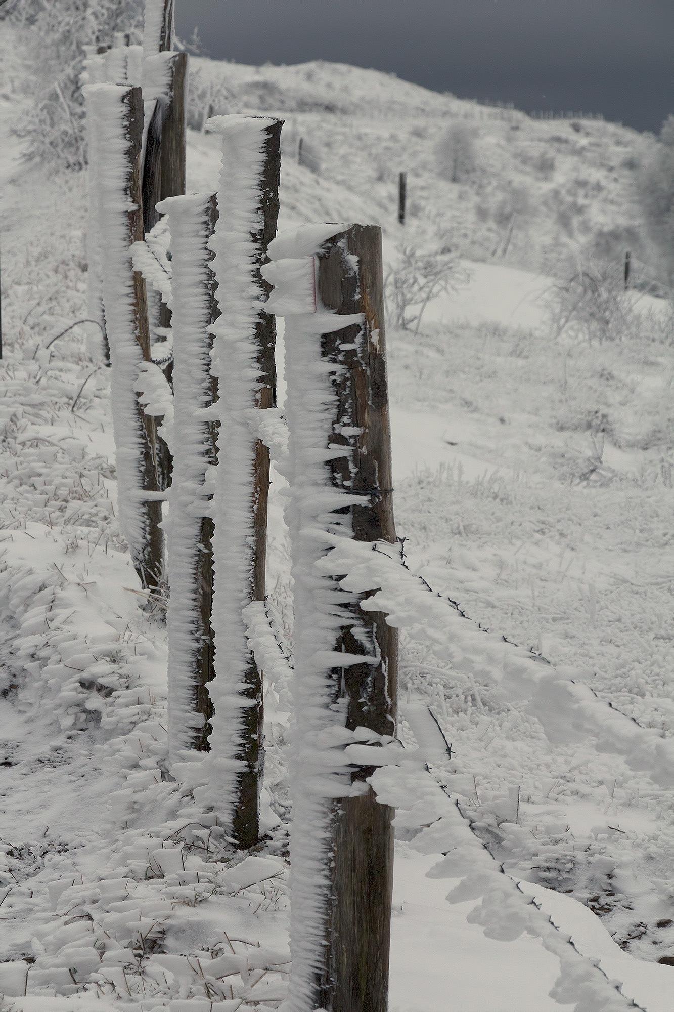 Frozen by SiGi