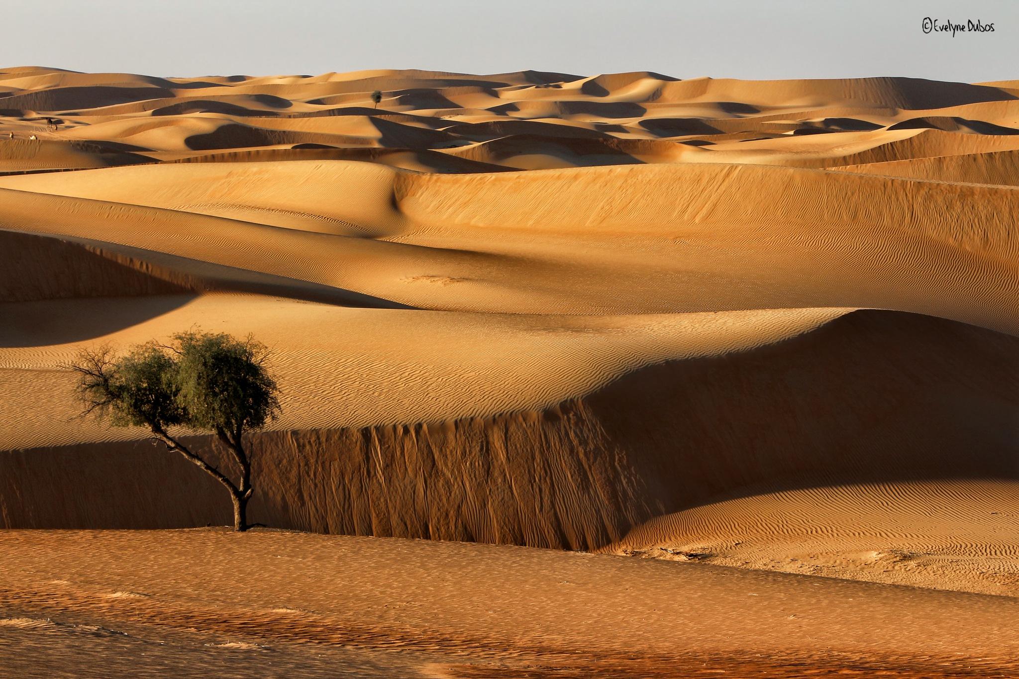 Desert ? by Evelyne Dubos