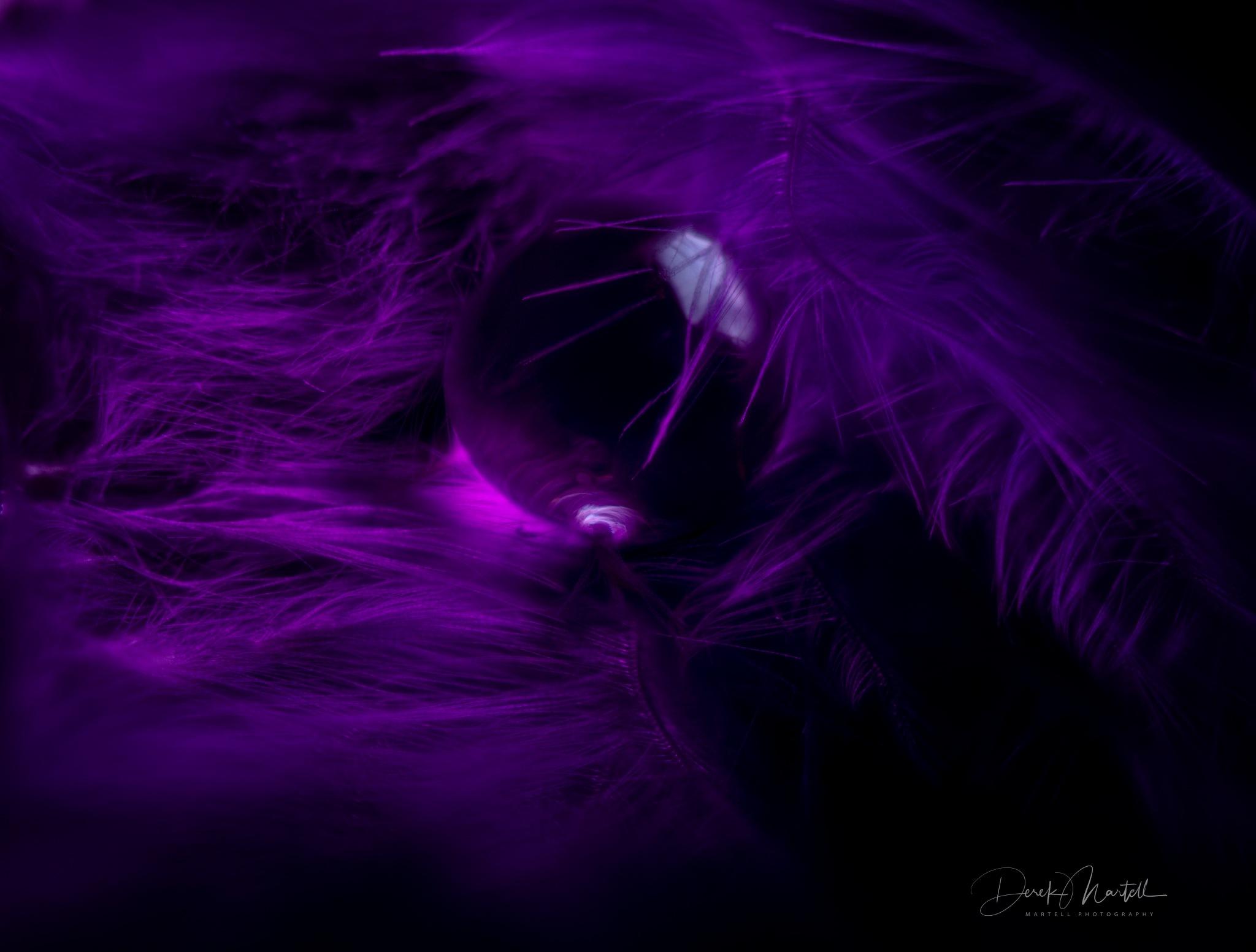 Purple Rain  by Martell Photography