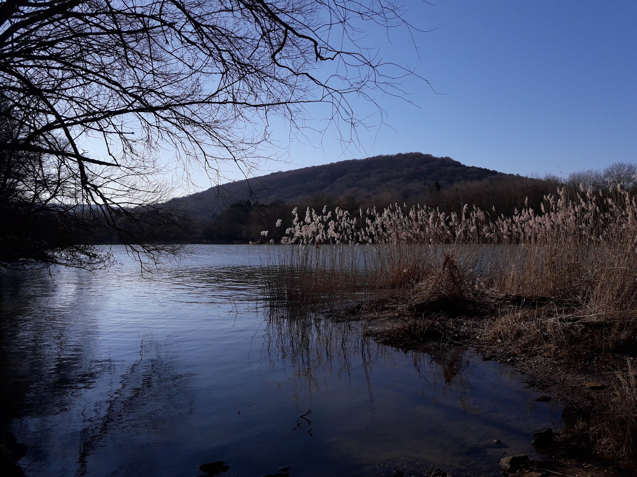 Sunny winter day by the Mosel river by eliette