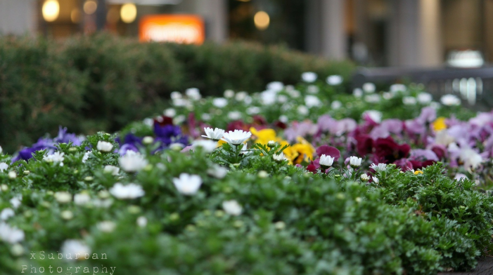 Flower bed by xSuburban_Photography
