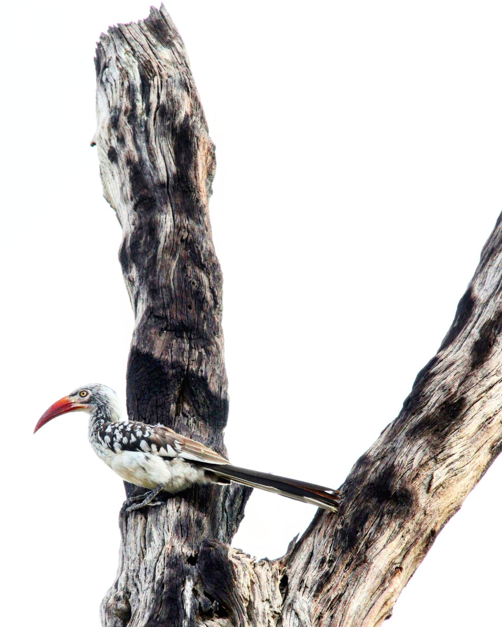 A bird in a tree  by fotoNik