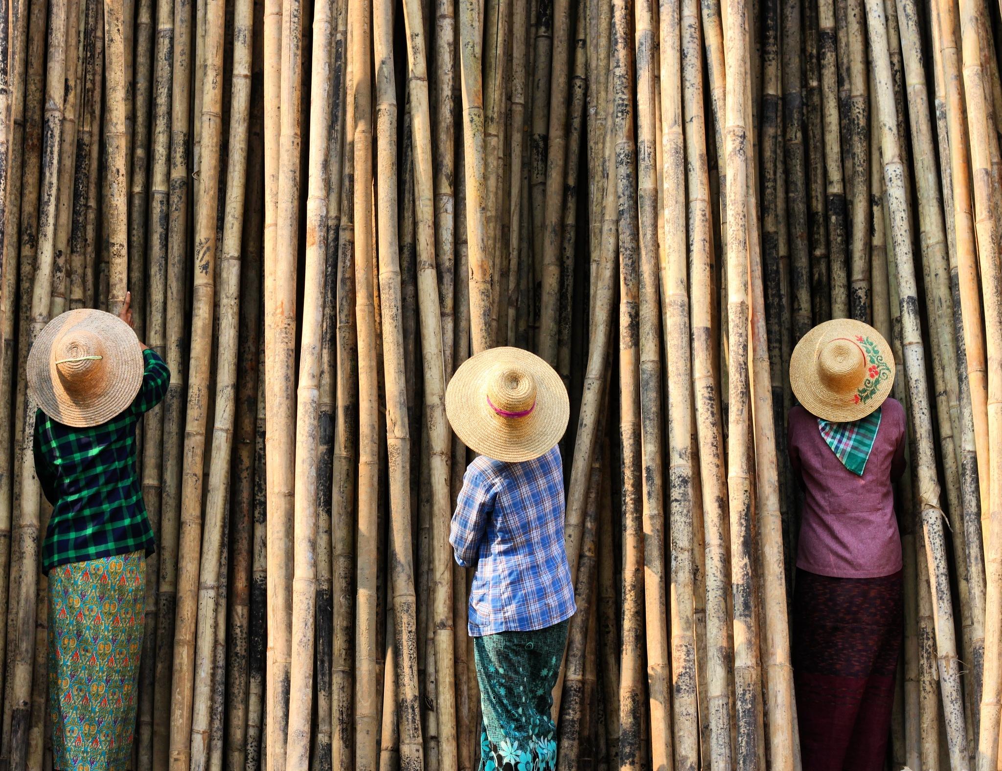 Bamboo Shopping by fotoNik