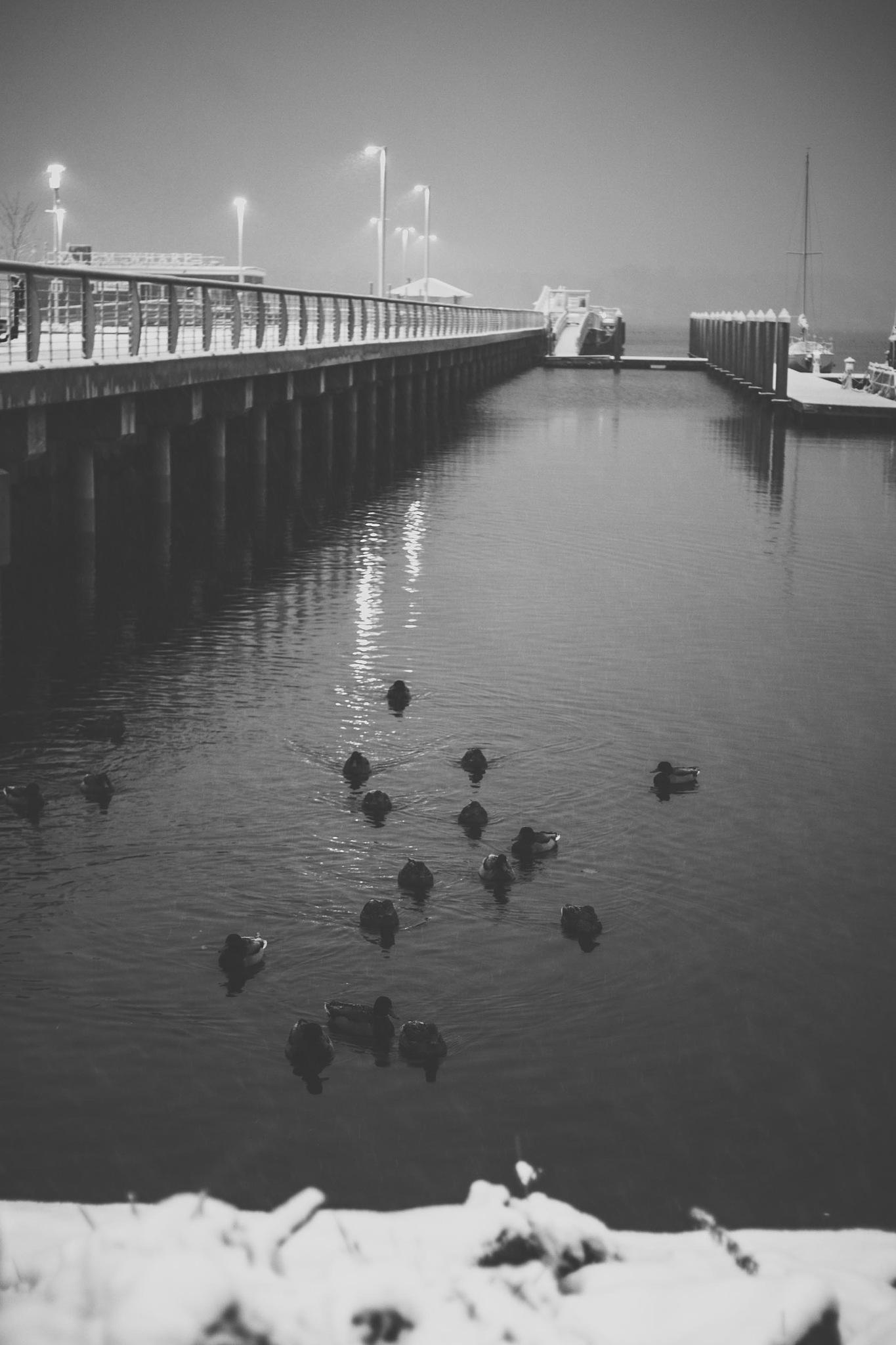 Salem Ferry Landing by Tatiana Grimaldi