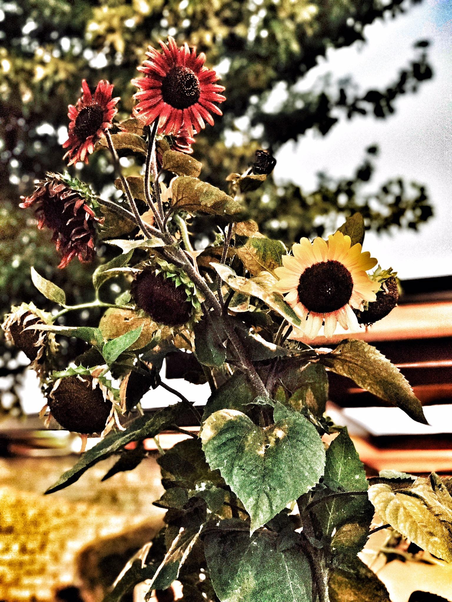 My flowers by Rebekkah Lee