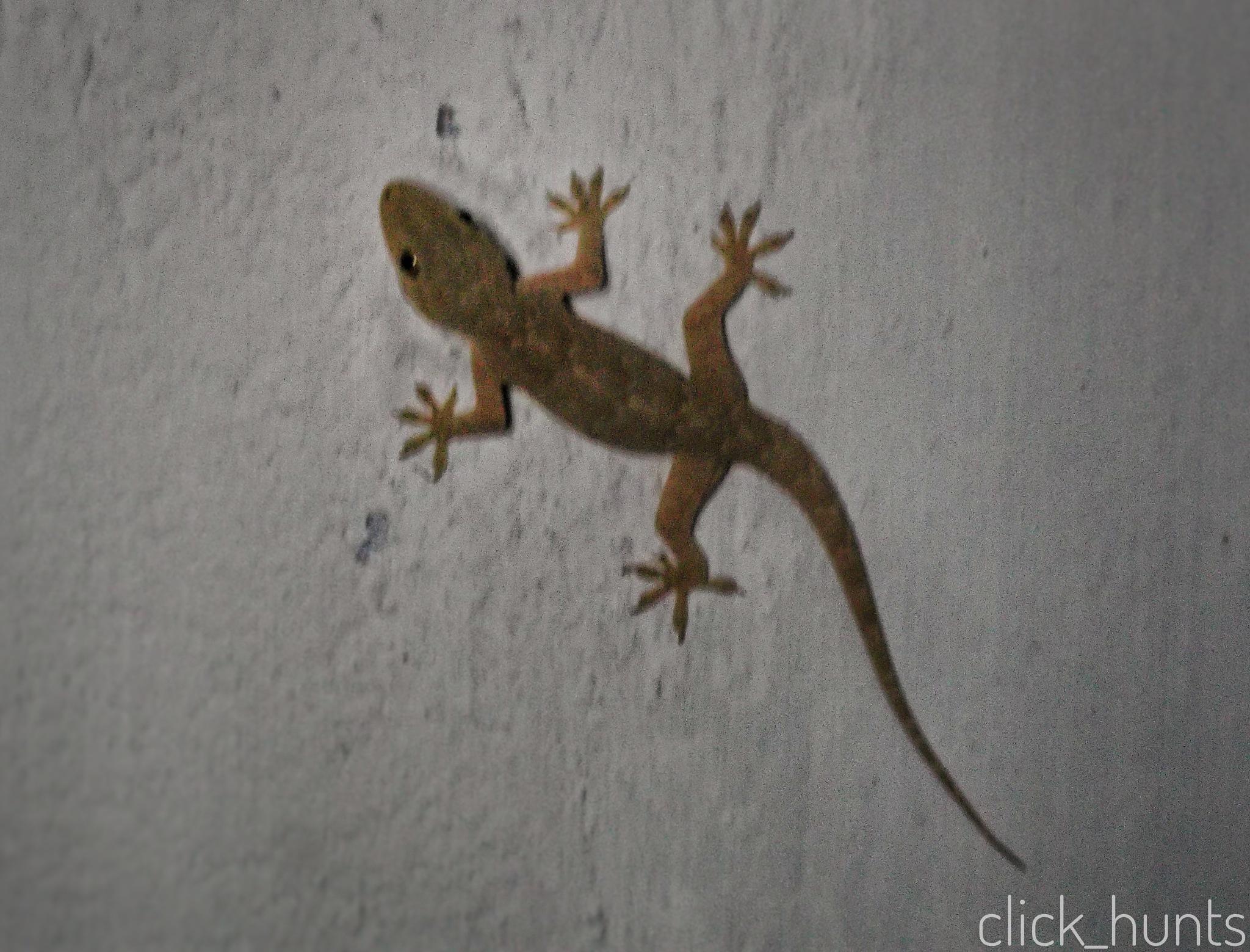 lizard  by click_hunts