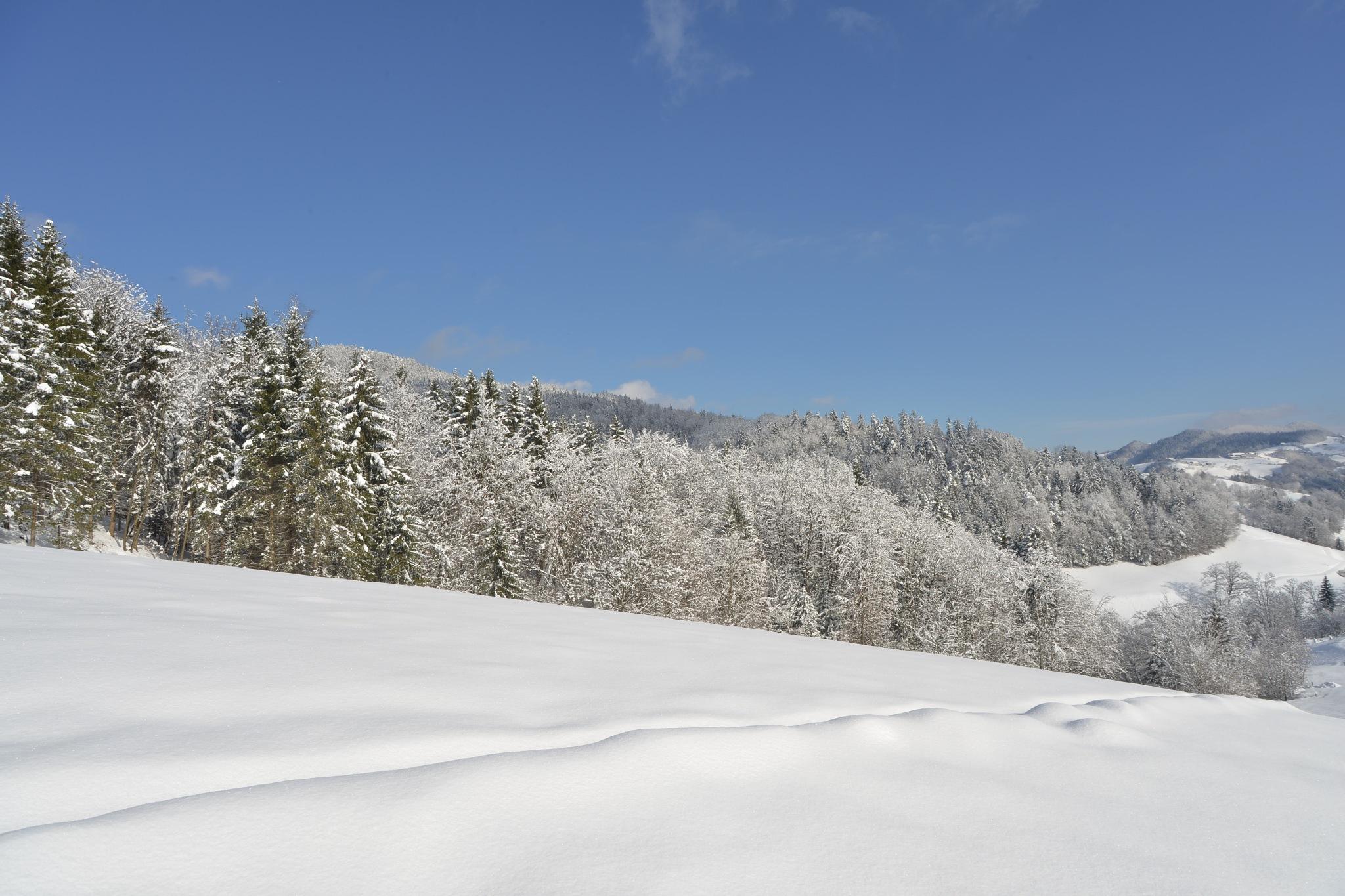 Winter by Mitja Derenda