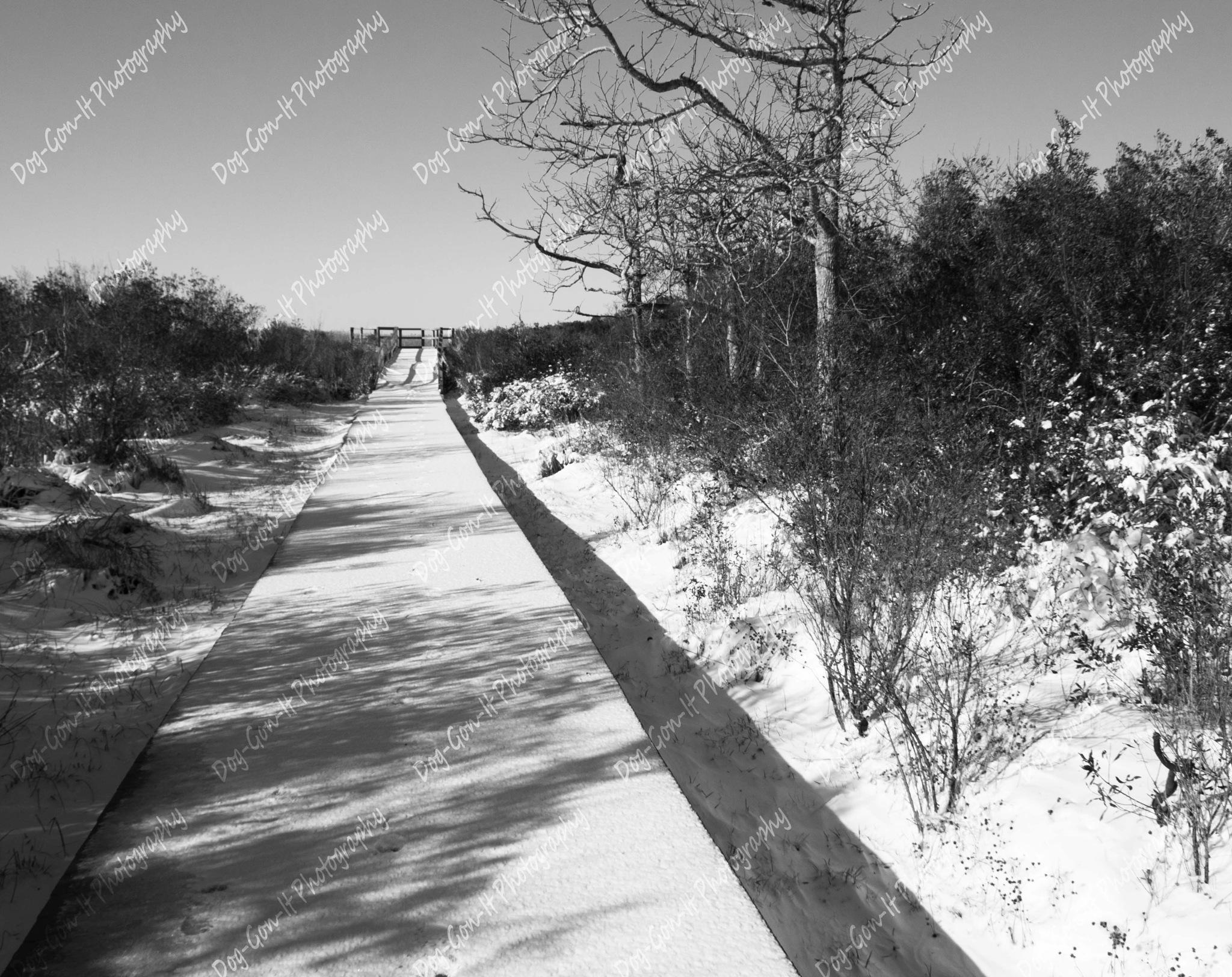A snowy walk by DogGonIt