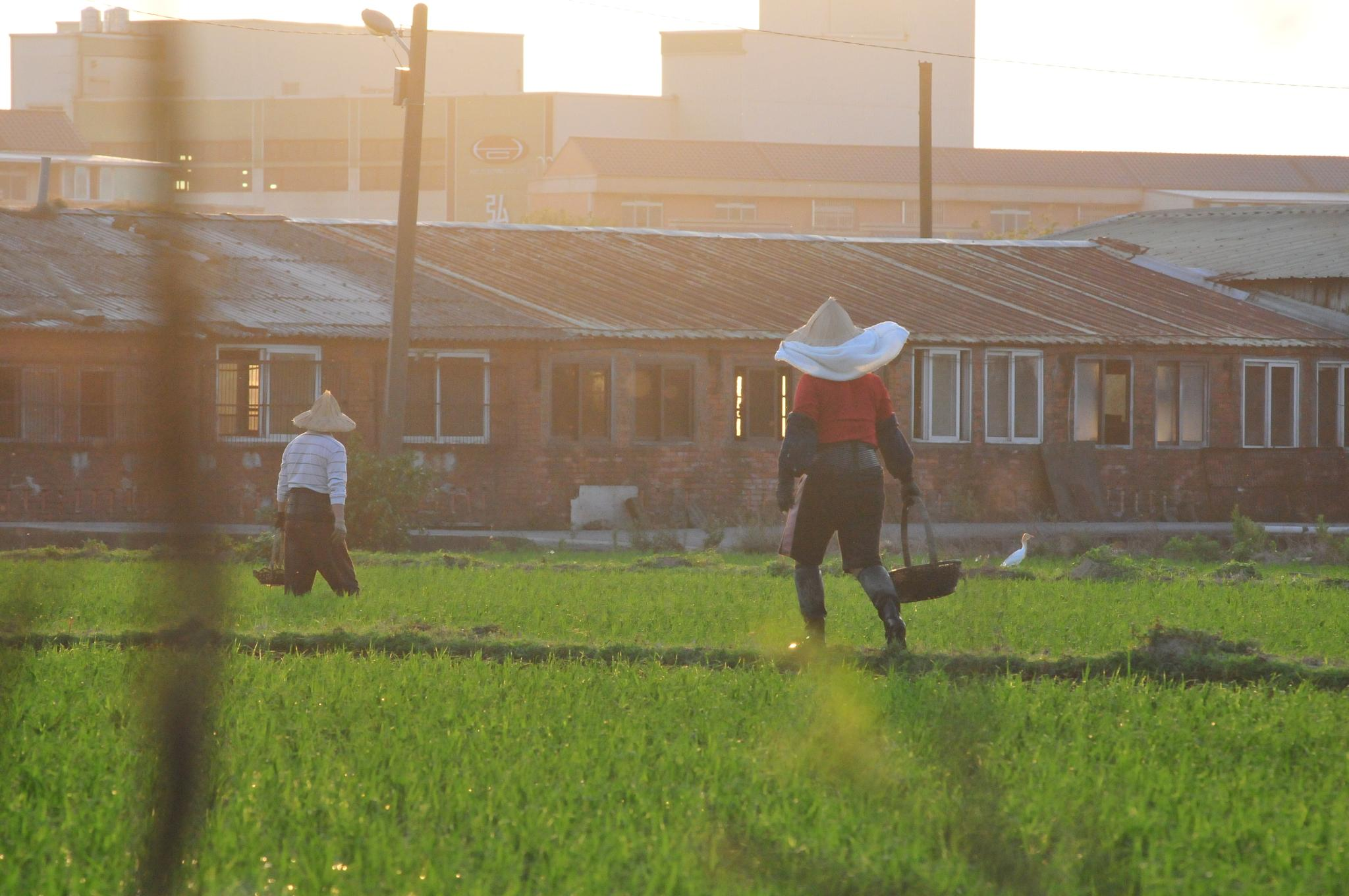 Farmer by HelenHu