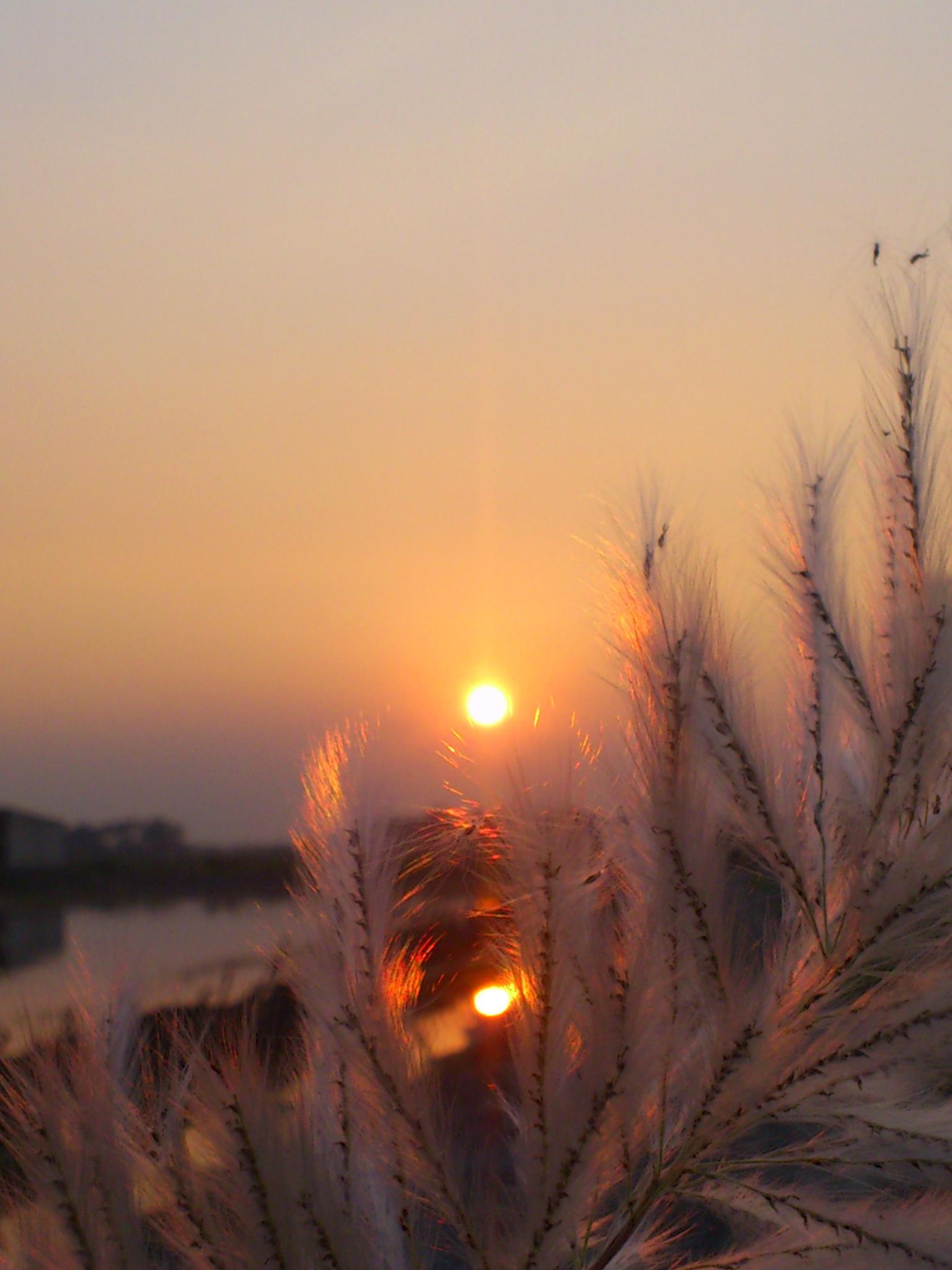 Photo in Landscape #sunset #flower #sunlight