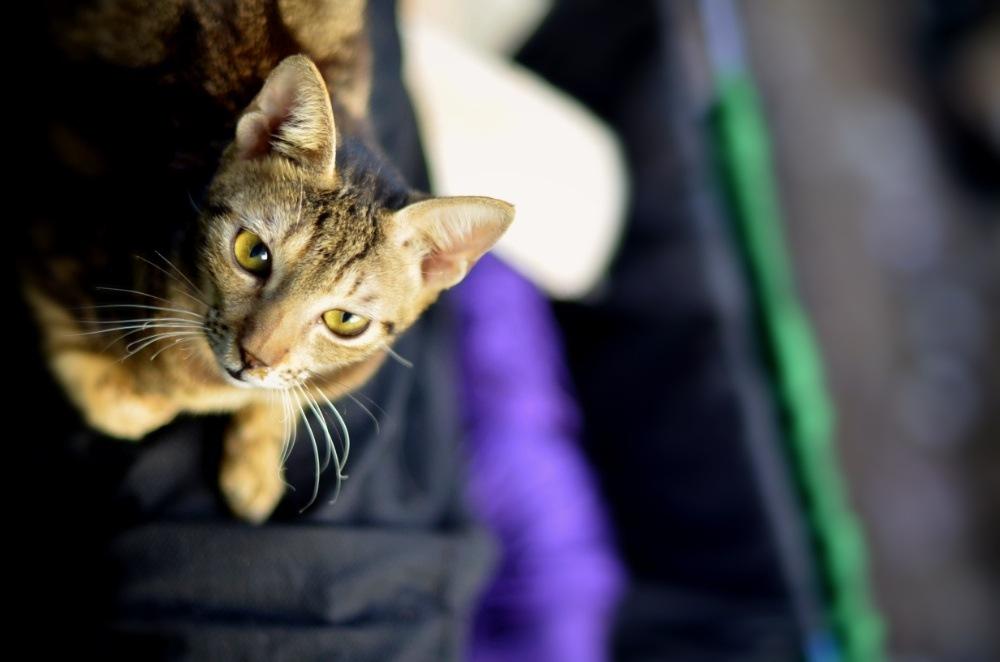 Cat by Tushar Nikon
