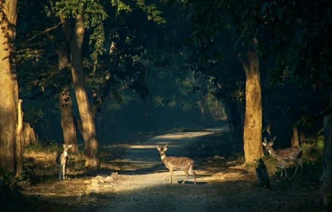 Jim Corbett National park by Aastha Kaushik