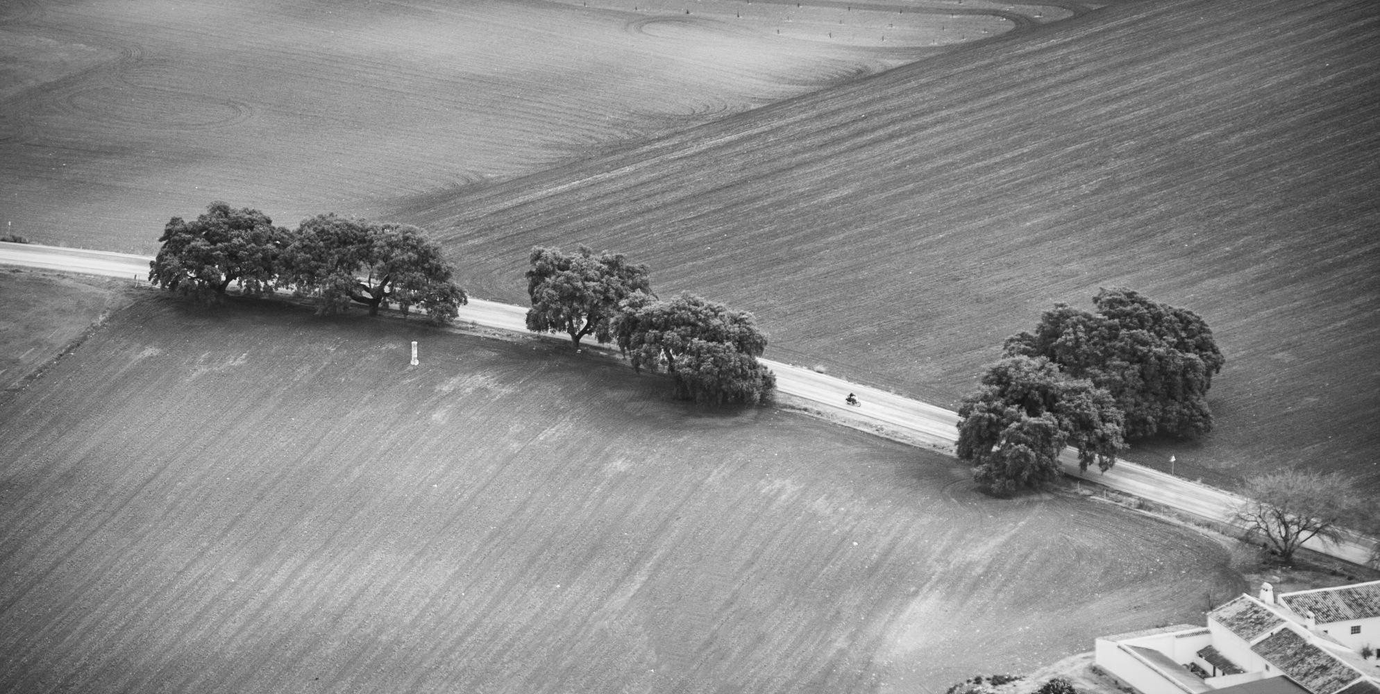 El camino by Fran Capote