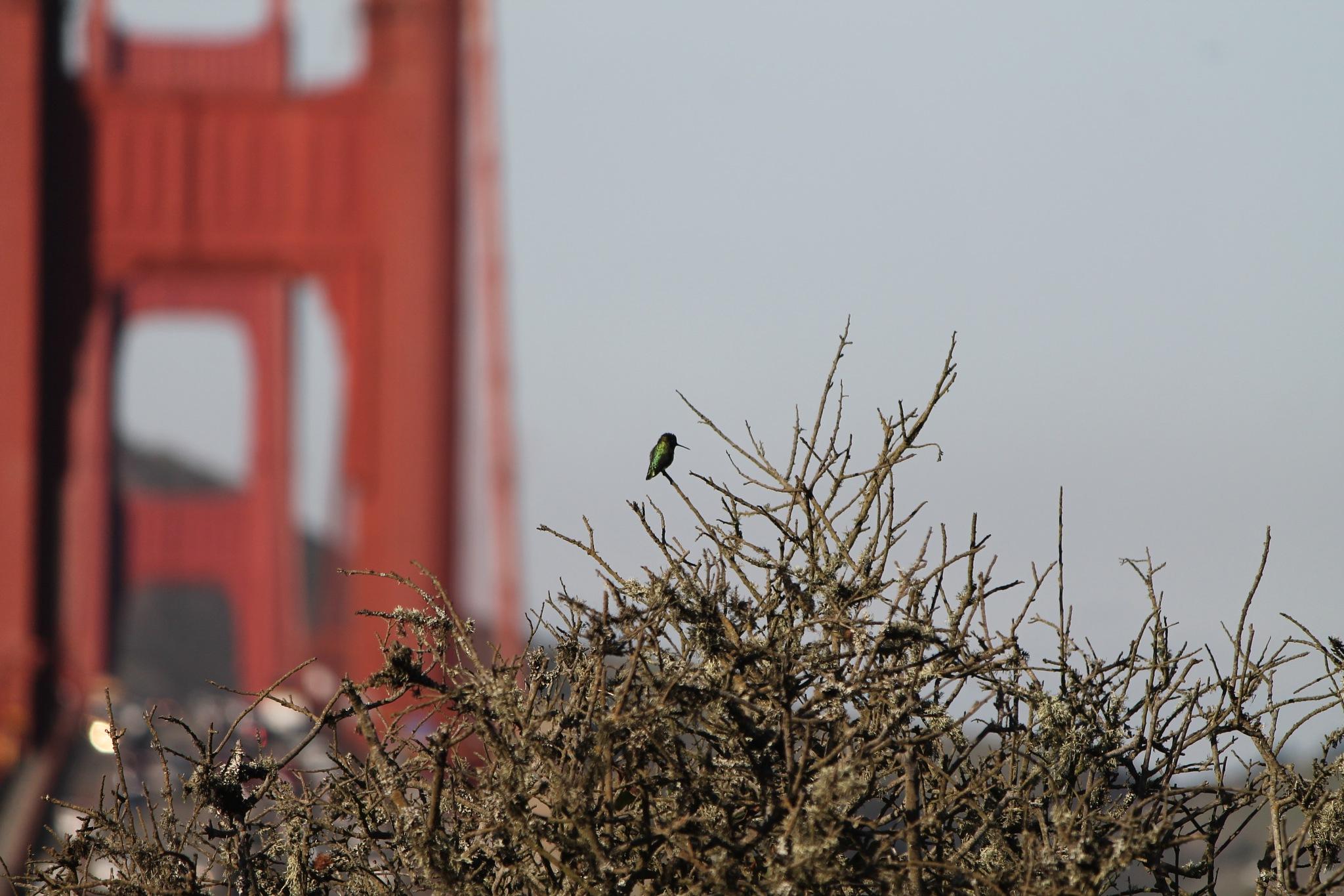 Waiting to cross the bridge by Pablo Senra