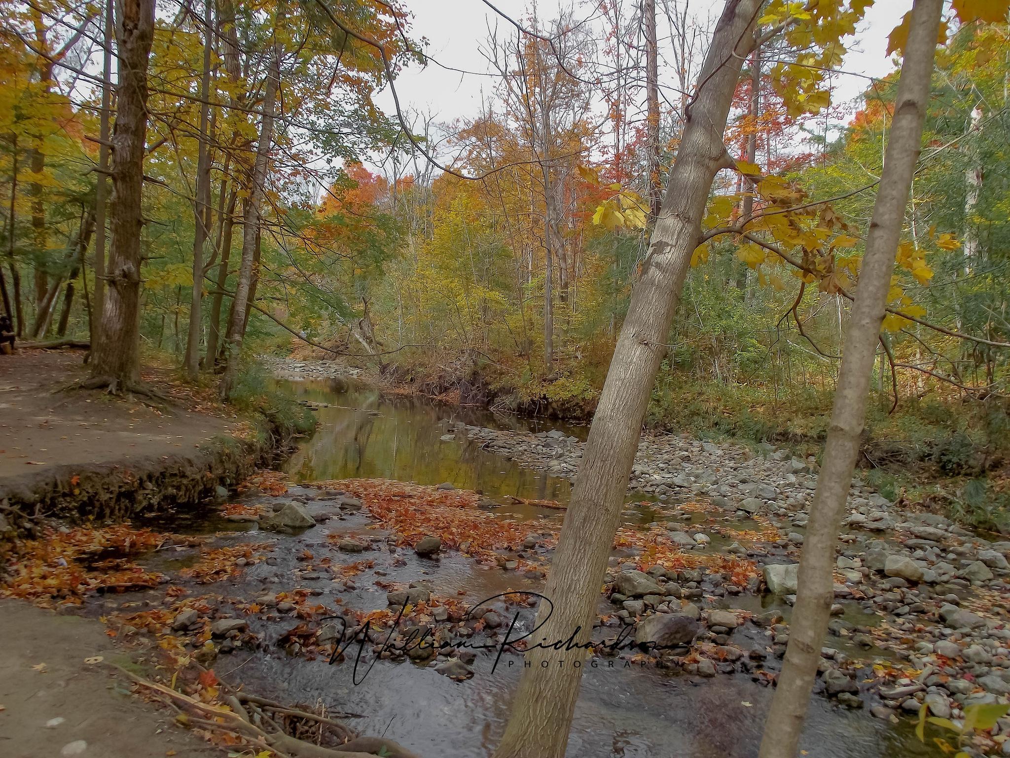Fall Stream by William Richardson