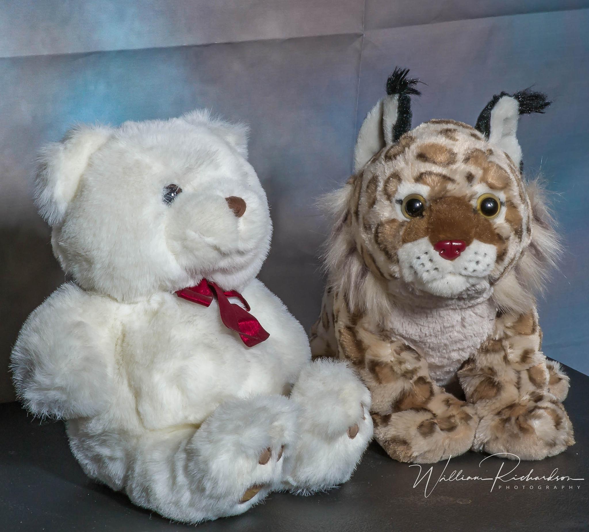 Stuffed Animals by William Richardson