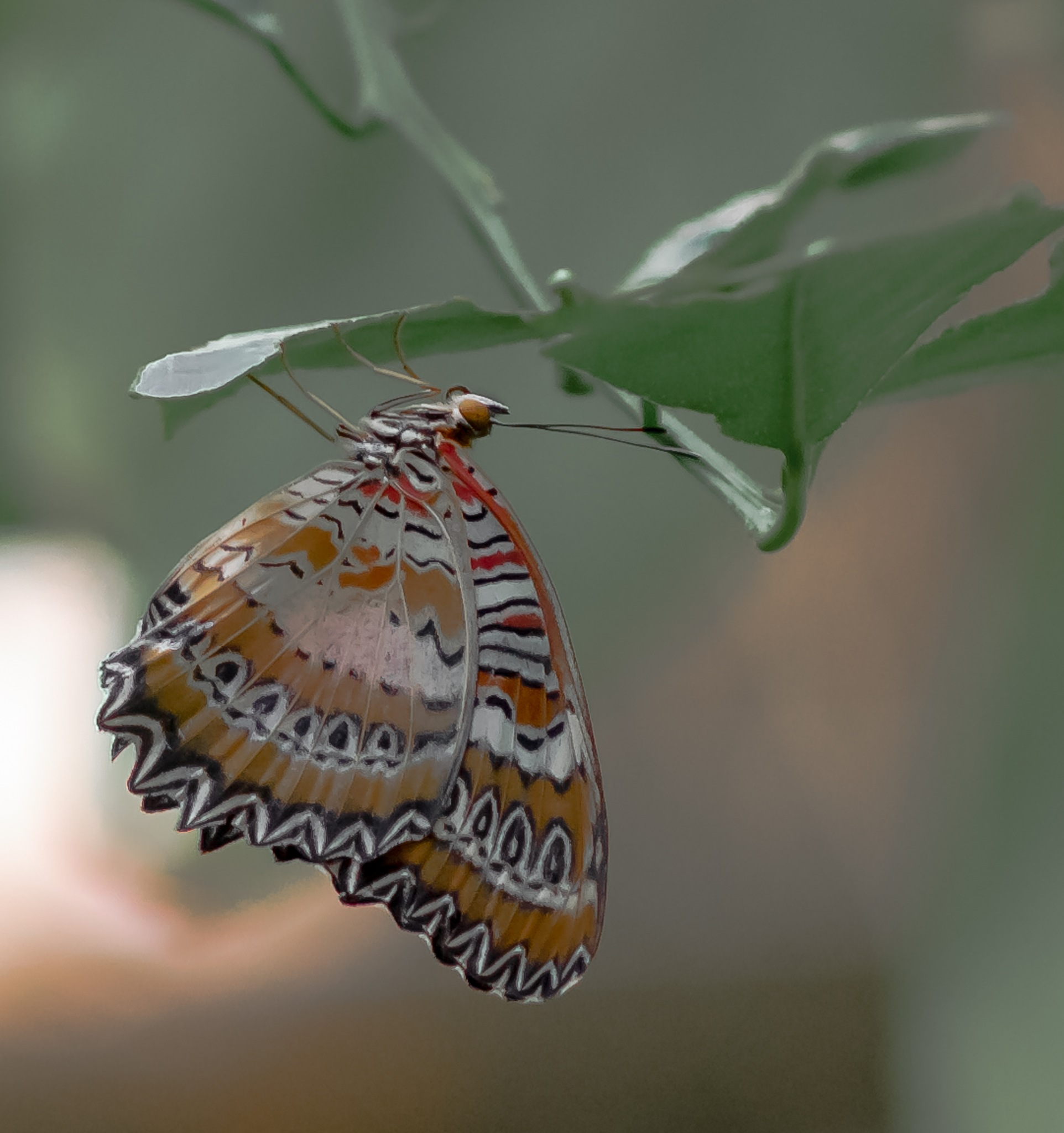 Butterly by William Richardson
