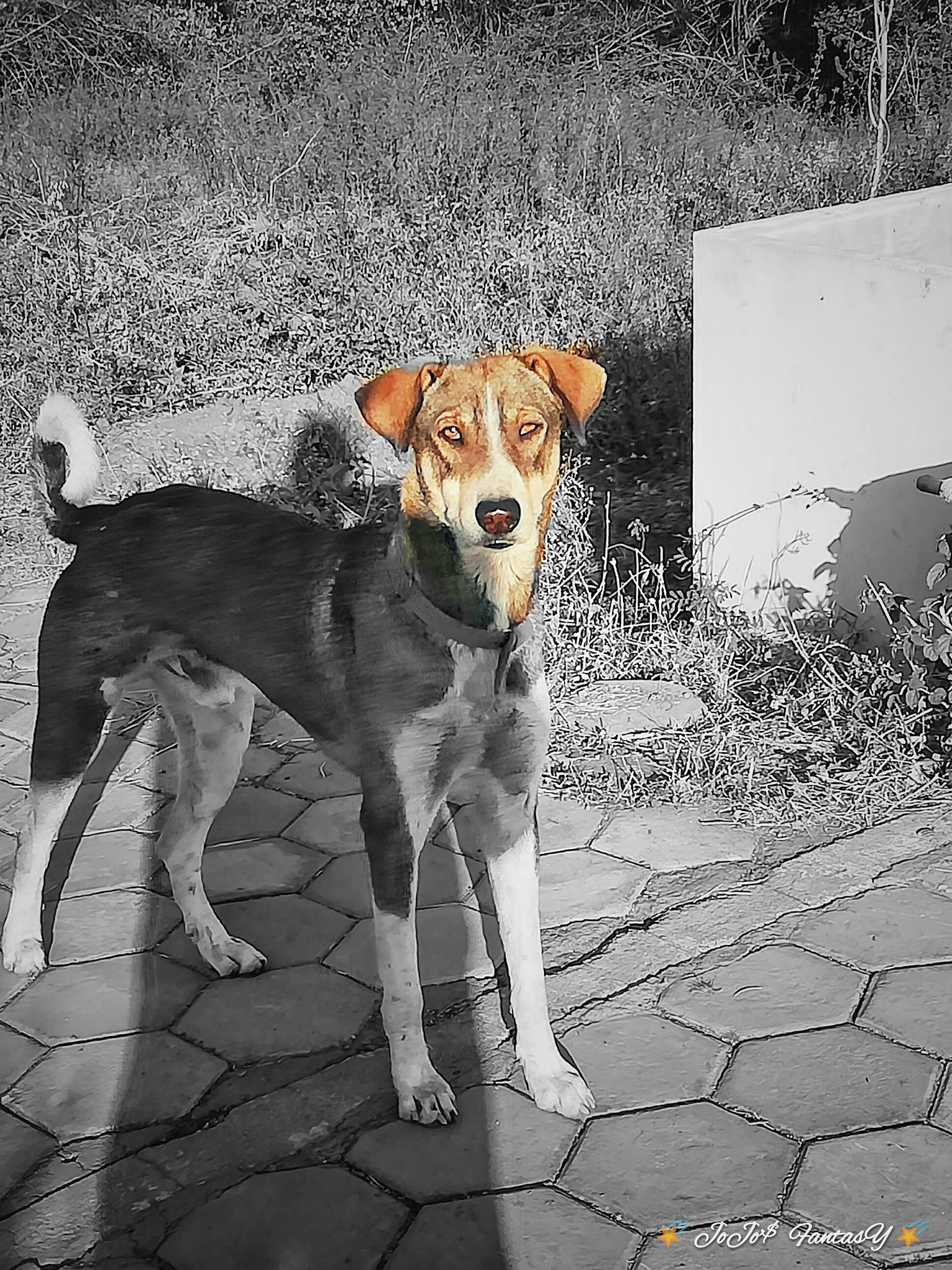 Attentive dog by lijojose185