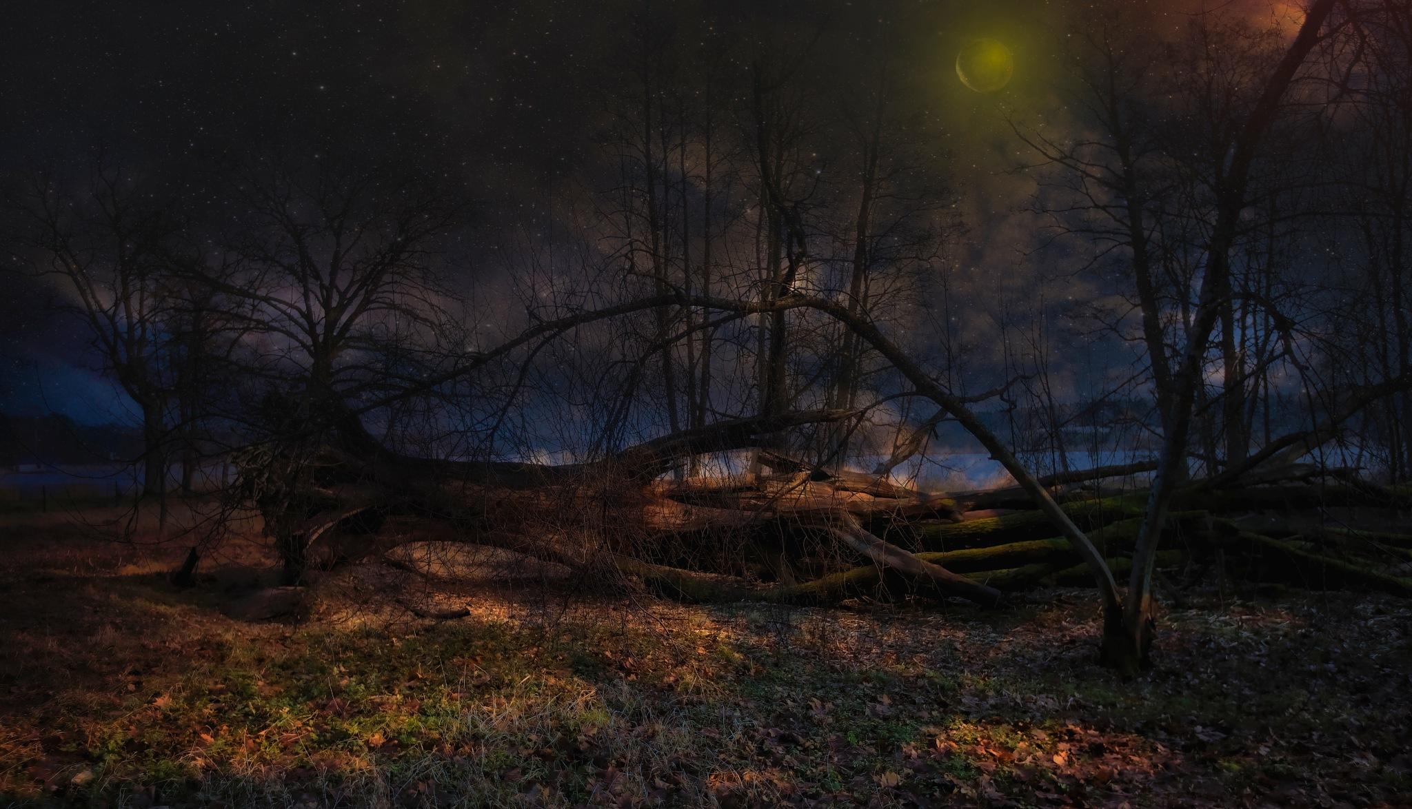 Tree in the night... by Aleksandrs Drozdovs