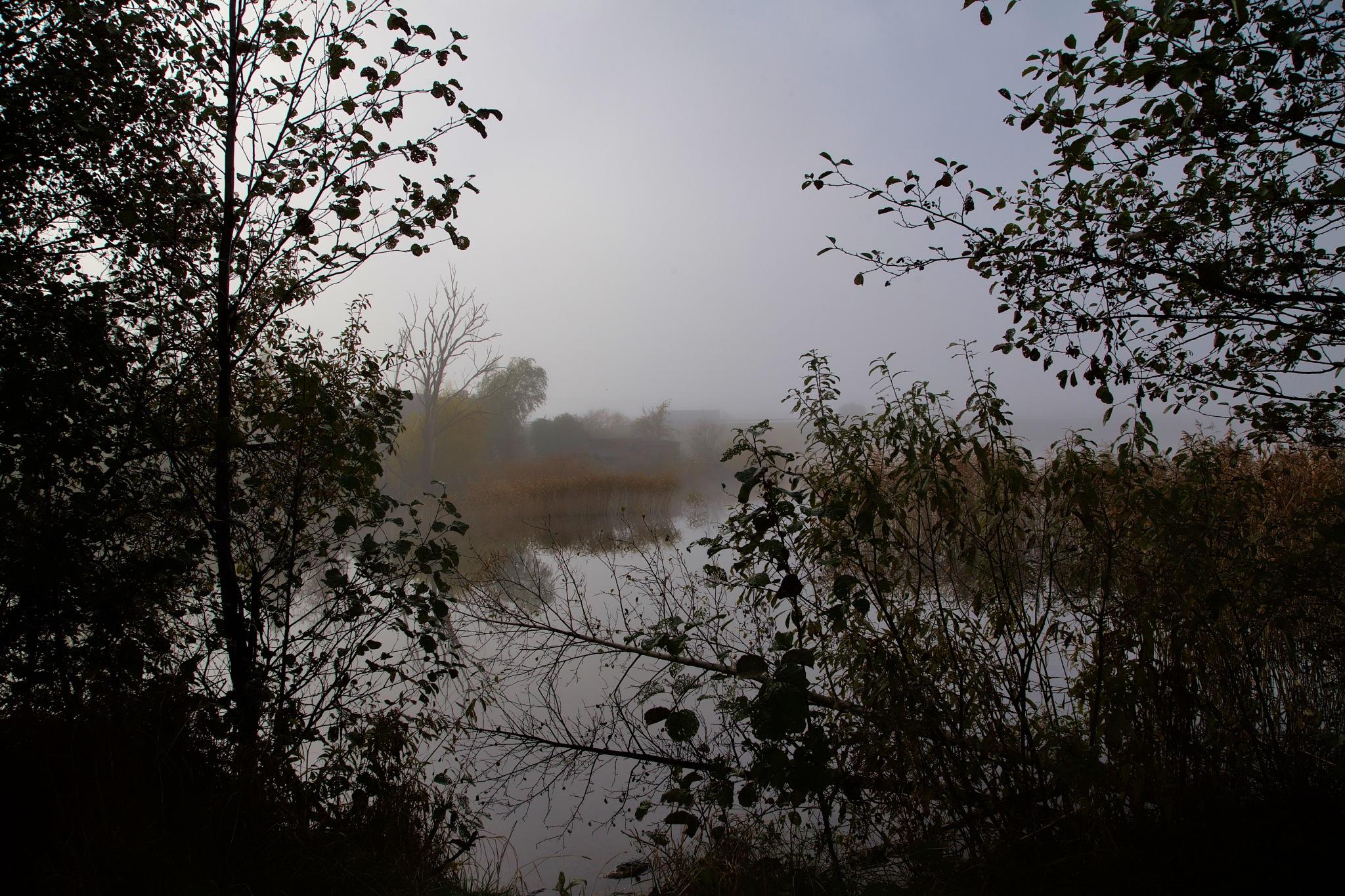 Foggy morning... by Aleksandrs Drozdovs