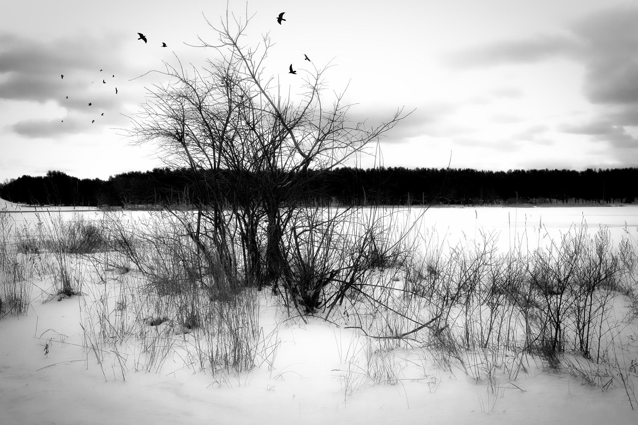 Lonely tree... by Aleksandrs Drozdovs